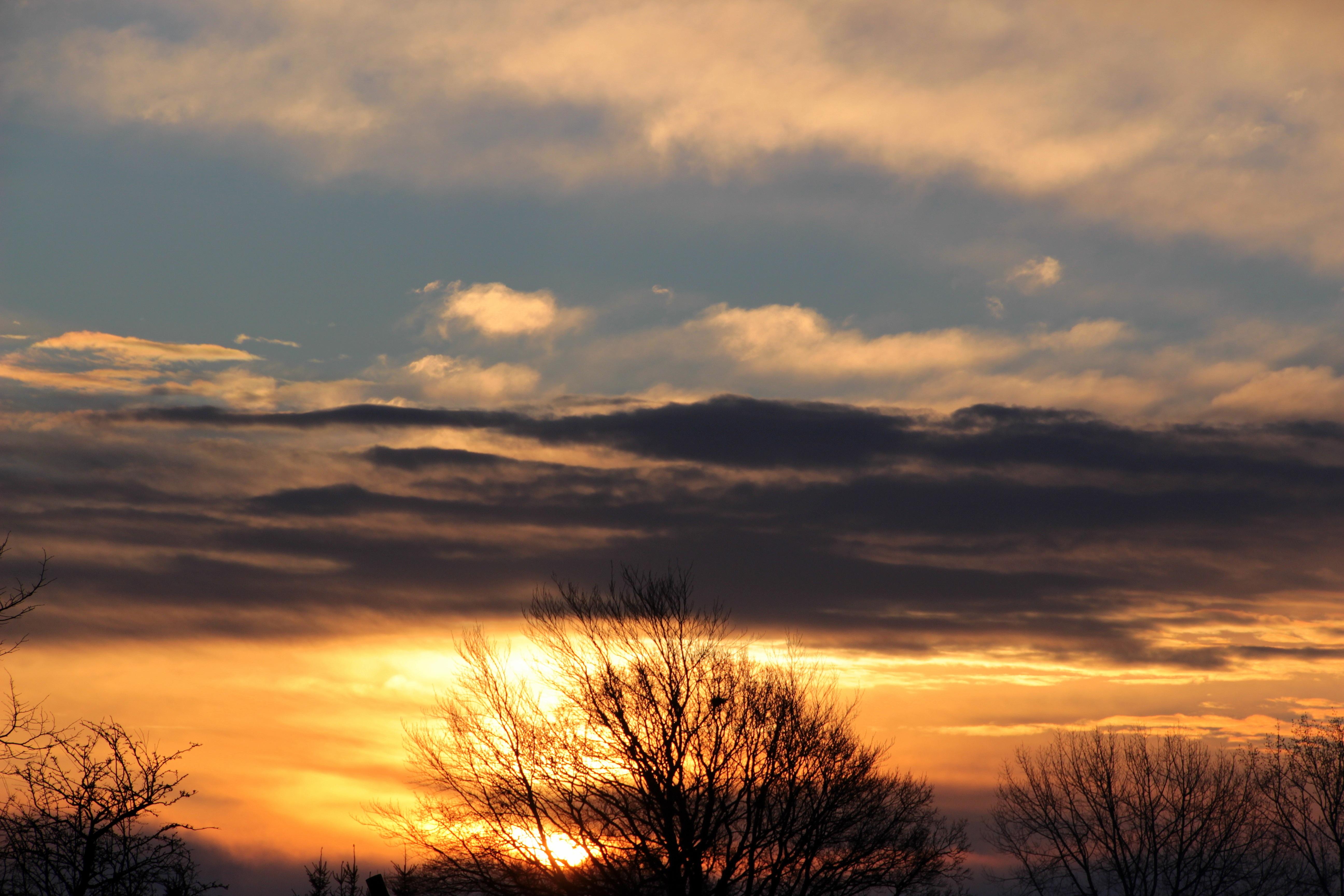 Trees Aesthetic Mood Morgenstimmung Awakening Afterglow Dark Clouds Morning Sun Good Meteorological Phenomenon Atmospheric