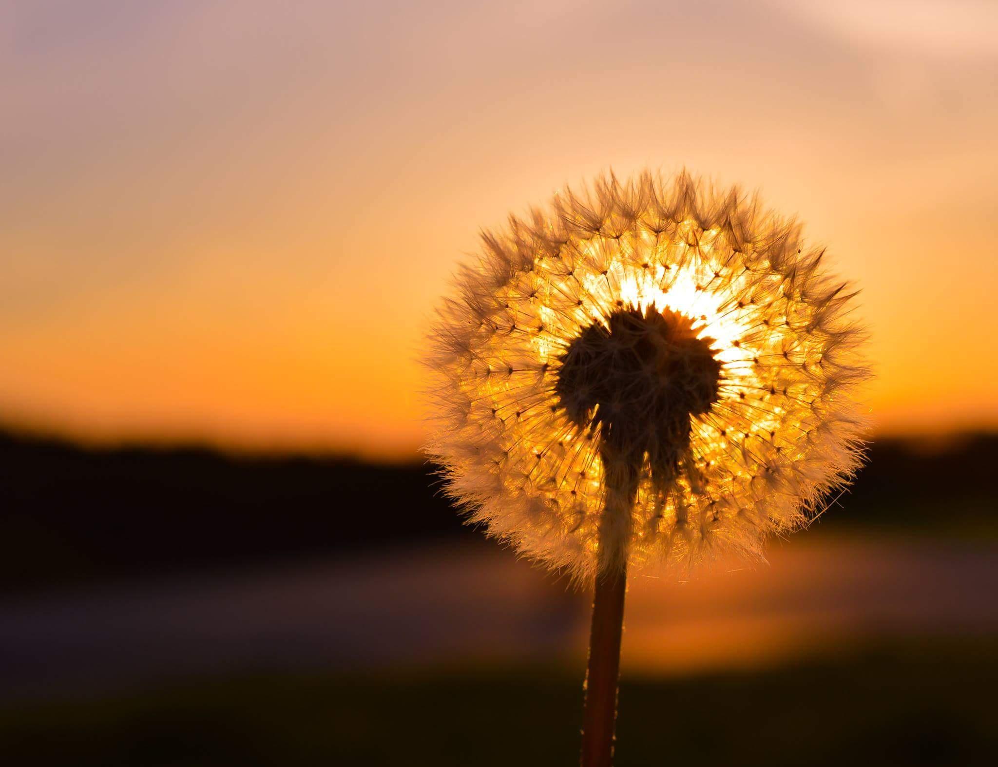 Gambar Alam Horison Bayangan Hitam Cahaya Menanam Matahari