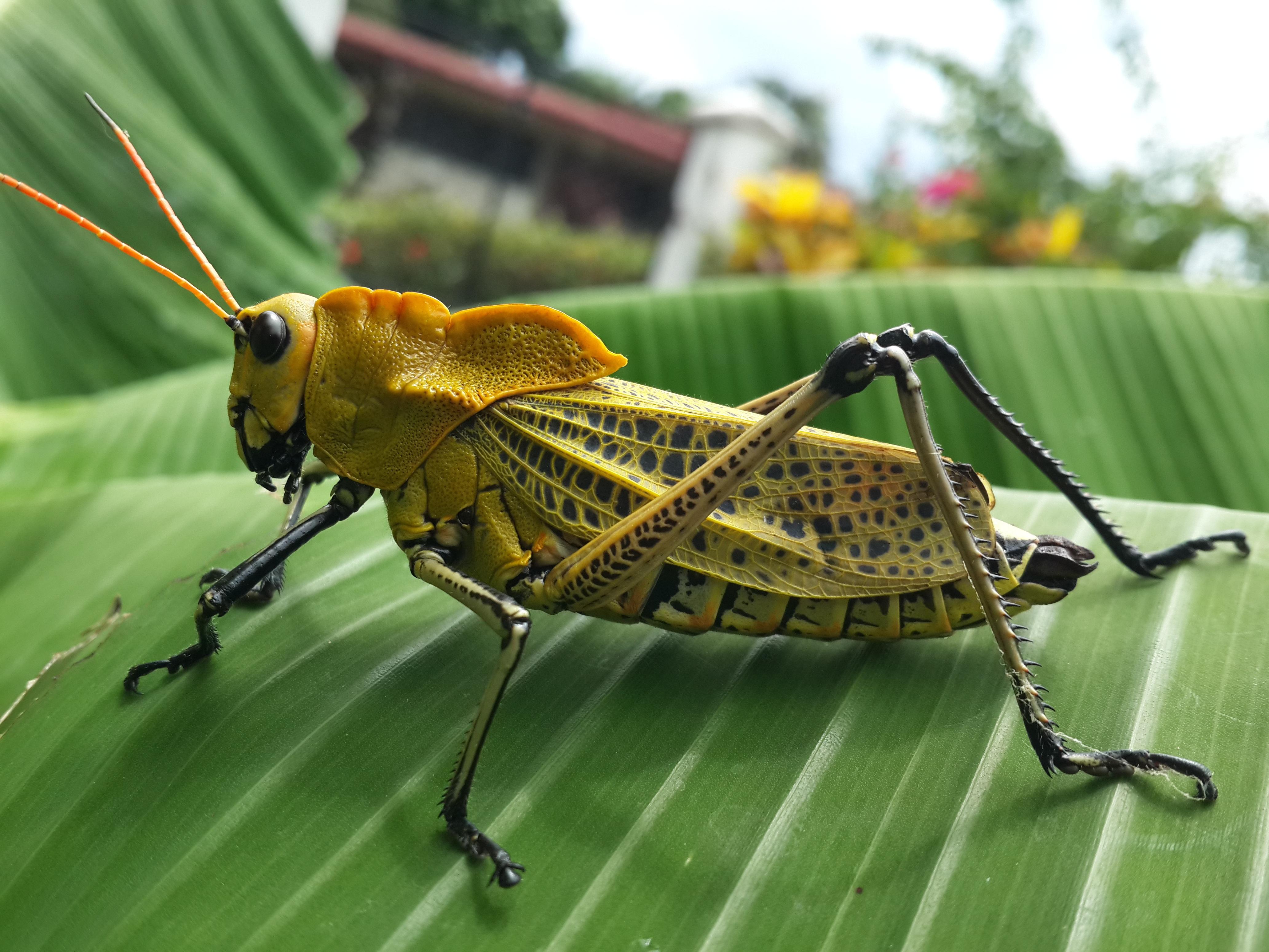 Fotos Gratis : Naturaleza, Fauna, Invertebrado, Langosta