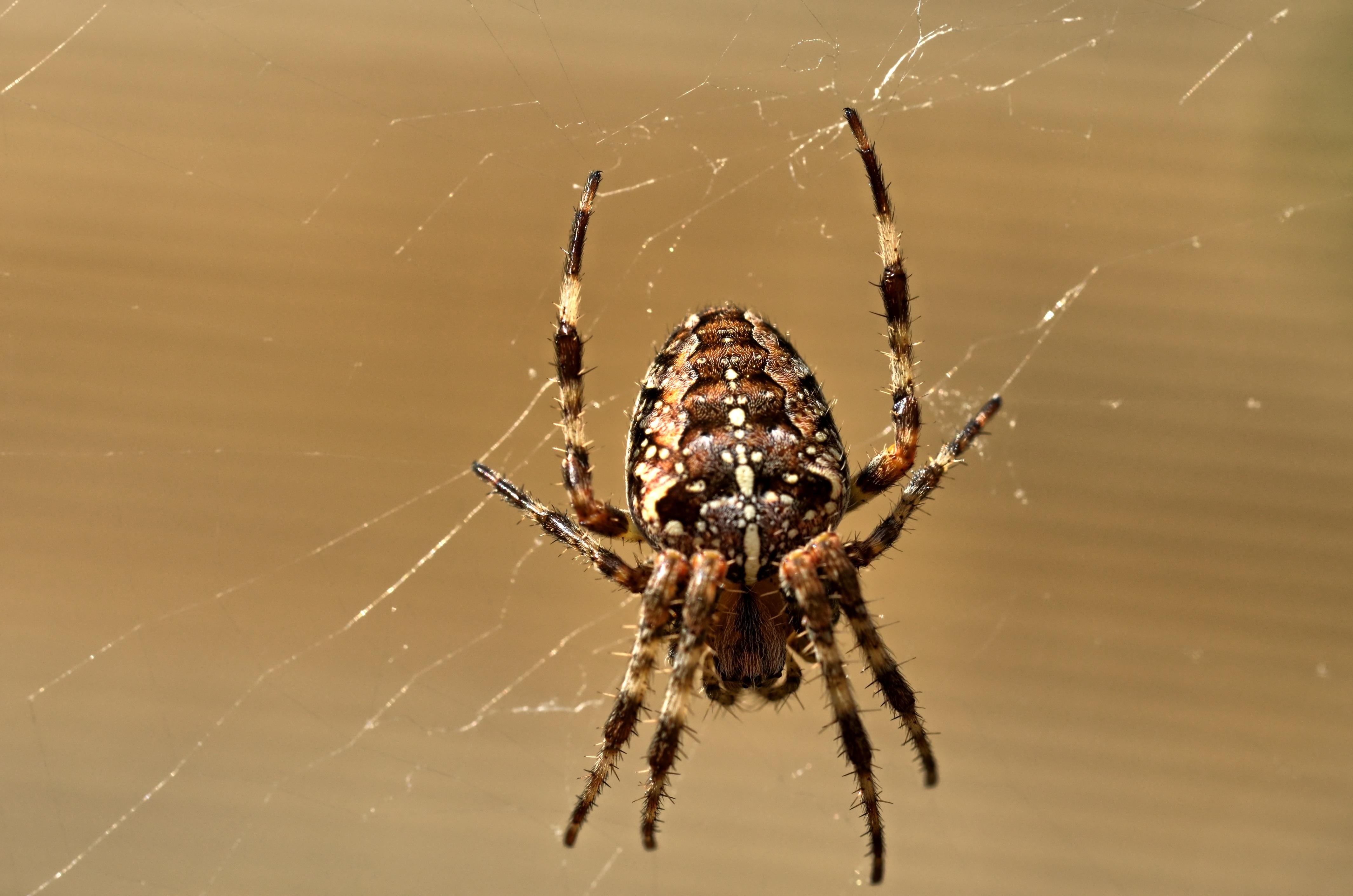 Free Images : nature, insect, fauna, invertebrate, cobweb, close up ...