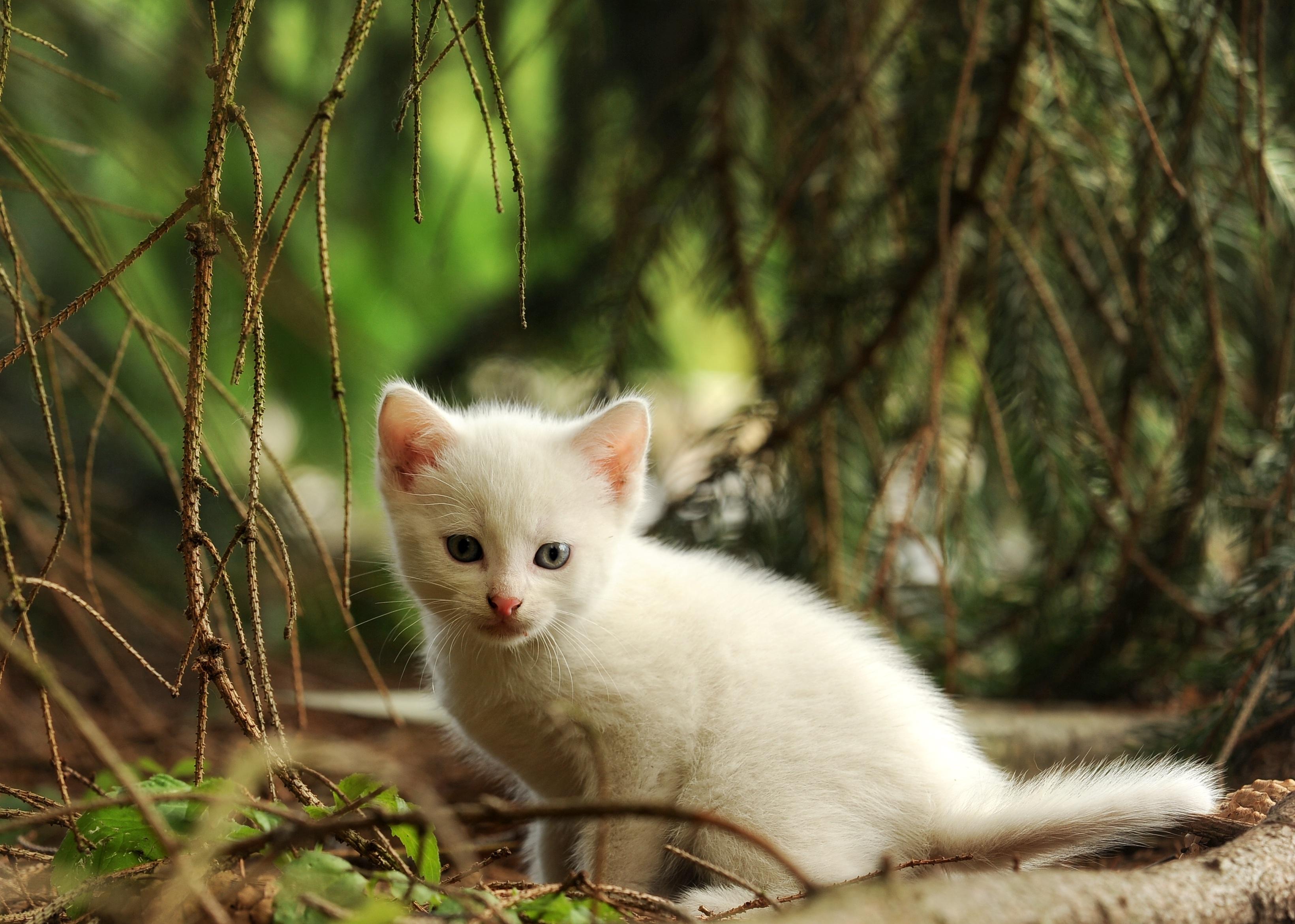 природа животные кот белый nature animals cat white  № 102760 загрузить