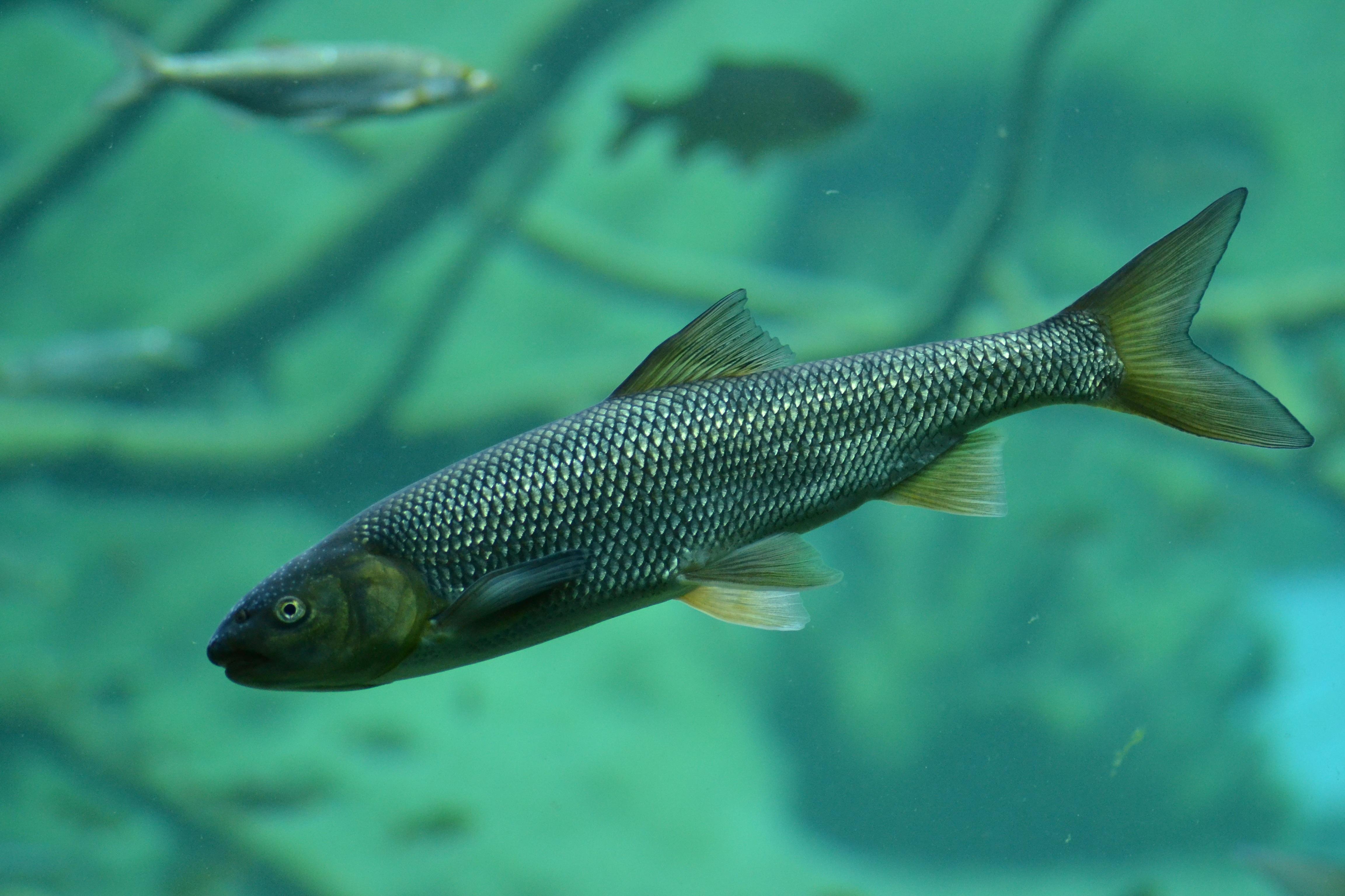группе фото рыб в российских водоемах дети