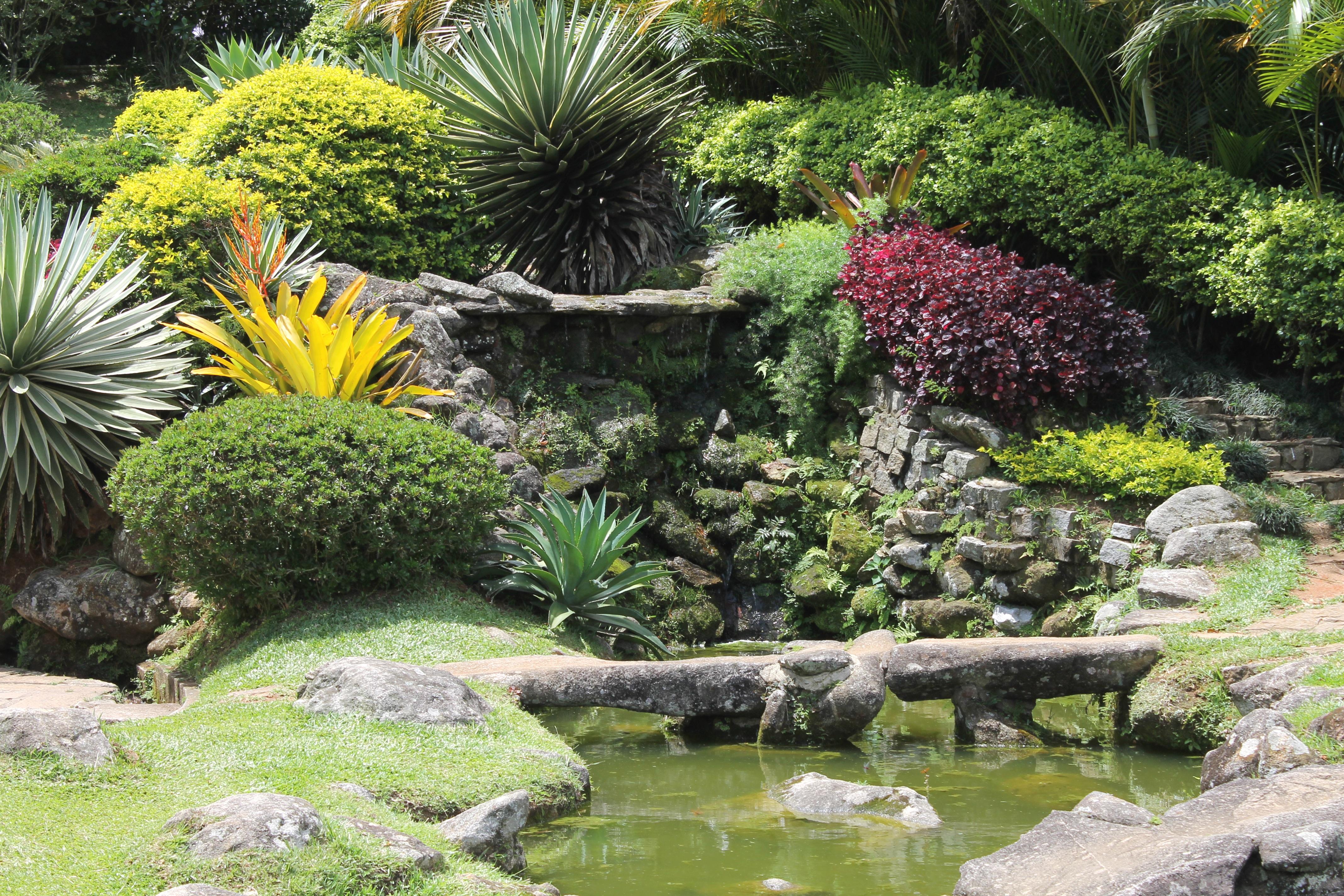 Fotos gratis : naturaleza, césped, flor, patio interior, botánica ...