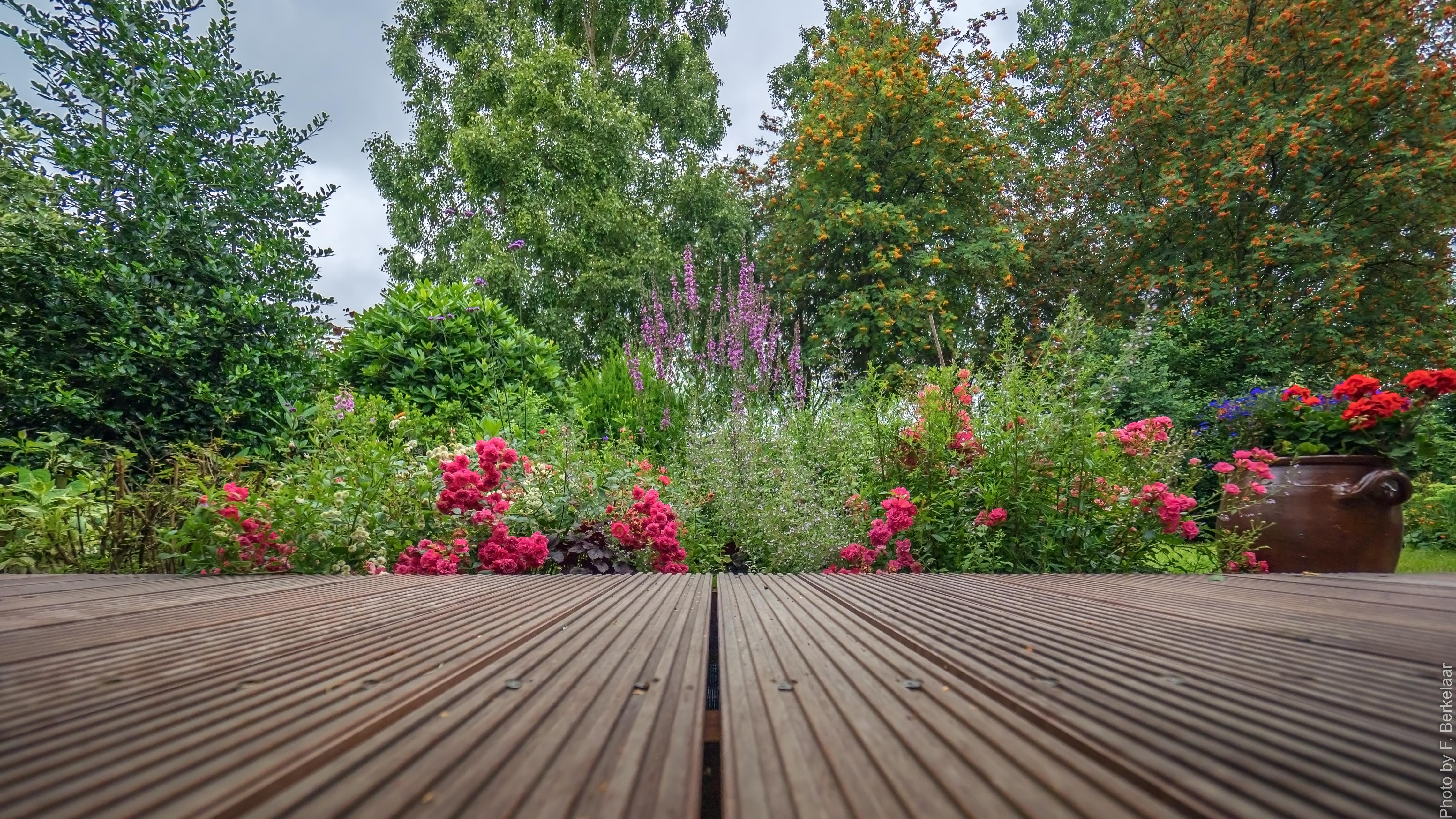 Outdoor Garten free images nature lawn flower walkway backyard botany