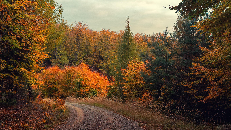 foto de Images Gratuites : la nature, feuille, l'automne, Écosystème ...