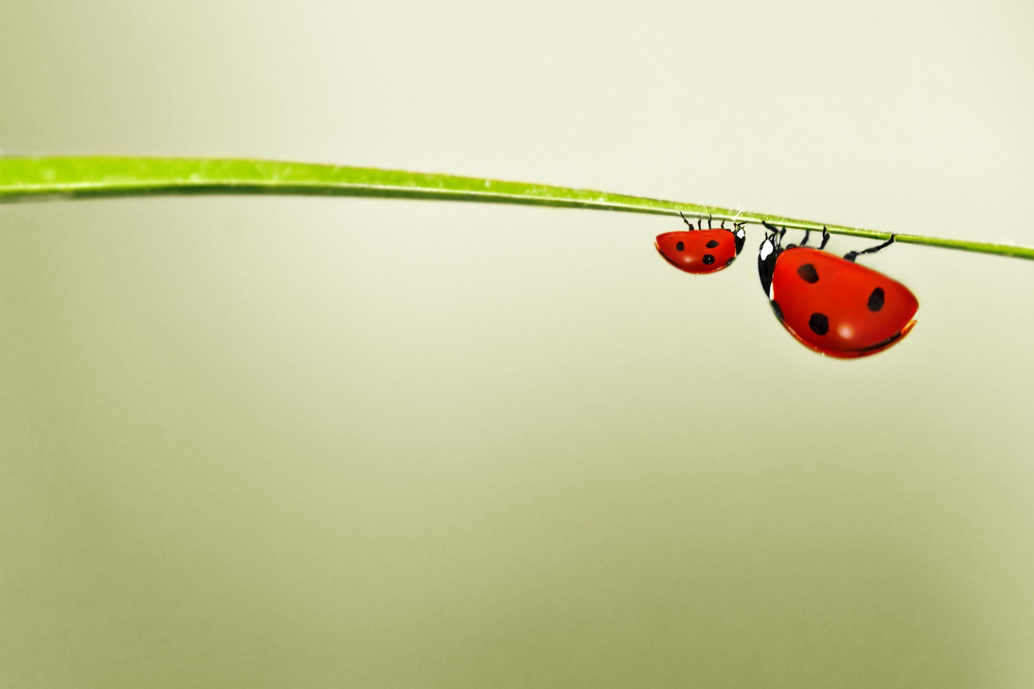 Kostenlose foto : Natur, Blatt, Blume, niedlich, Linie, Grün, rot ...