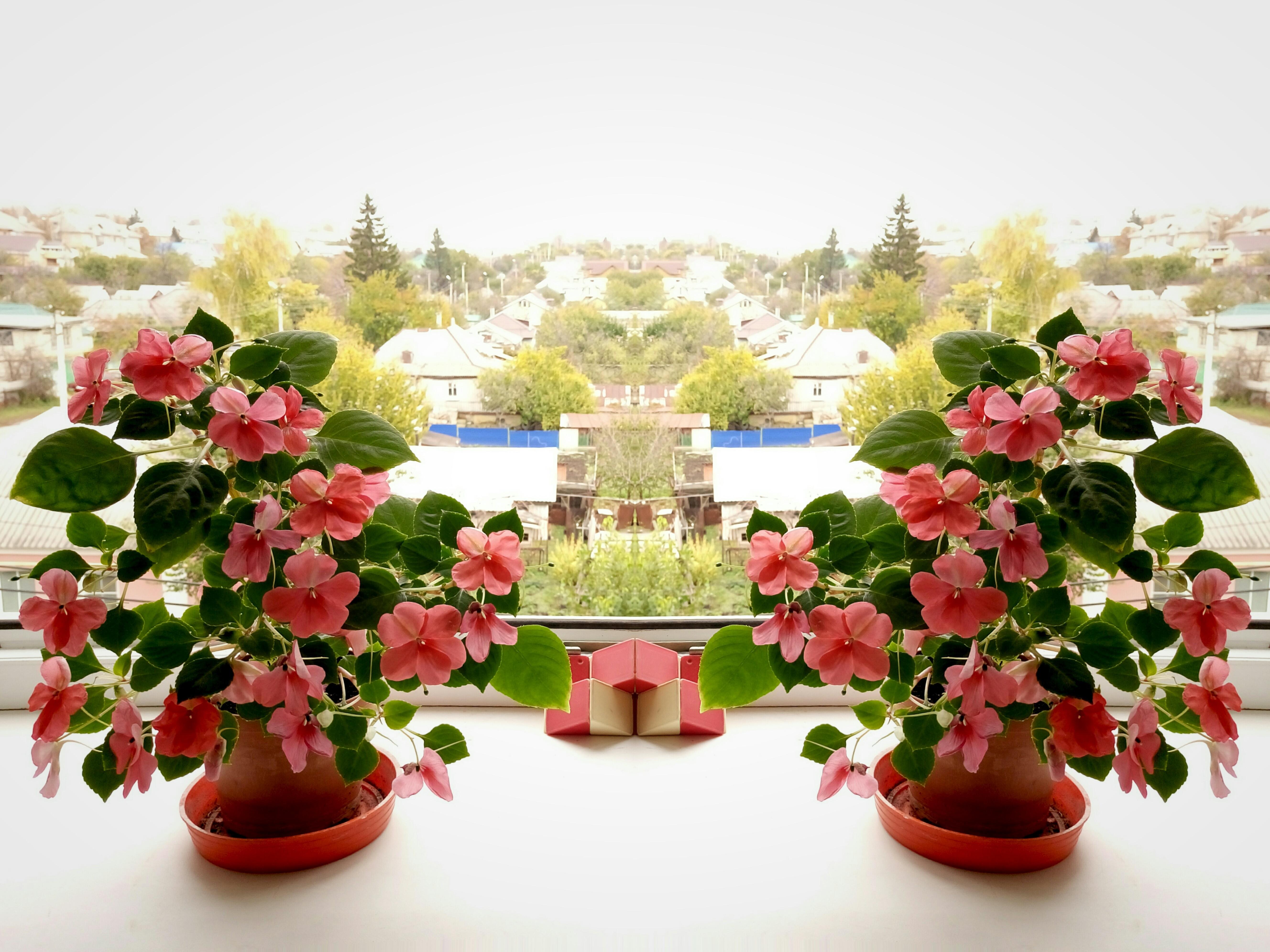 kostenlose foto natur licht blume bl tenblatt bl hen rot rosa flora blumenbl tter. Black Bedroom Furniture Sets. Home Design Ideas