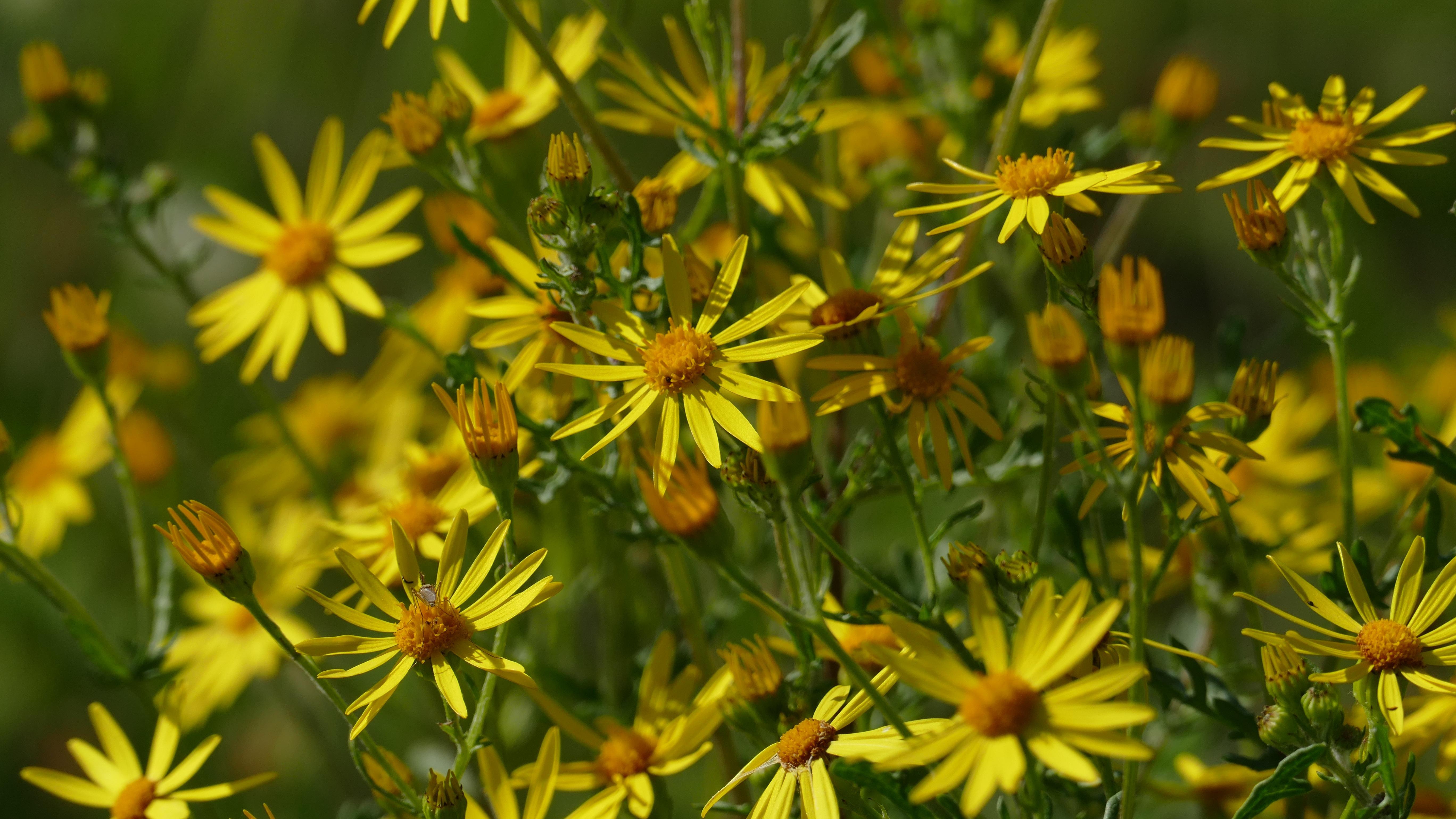 Free Images Nature Light Meadow Prairie Petal Botany Close