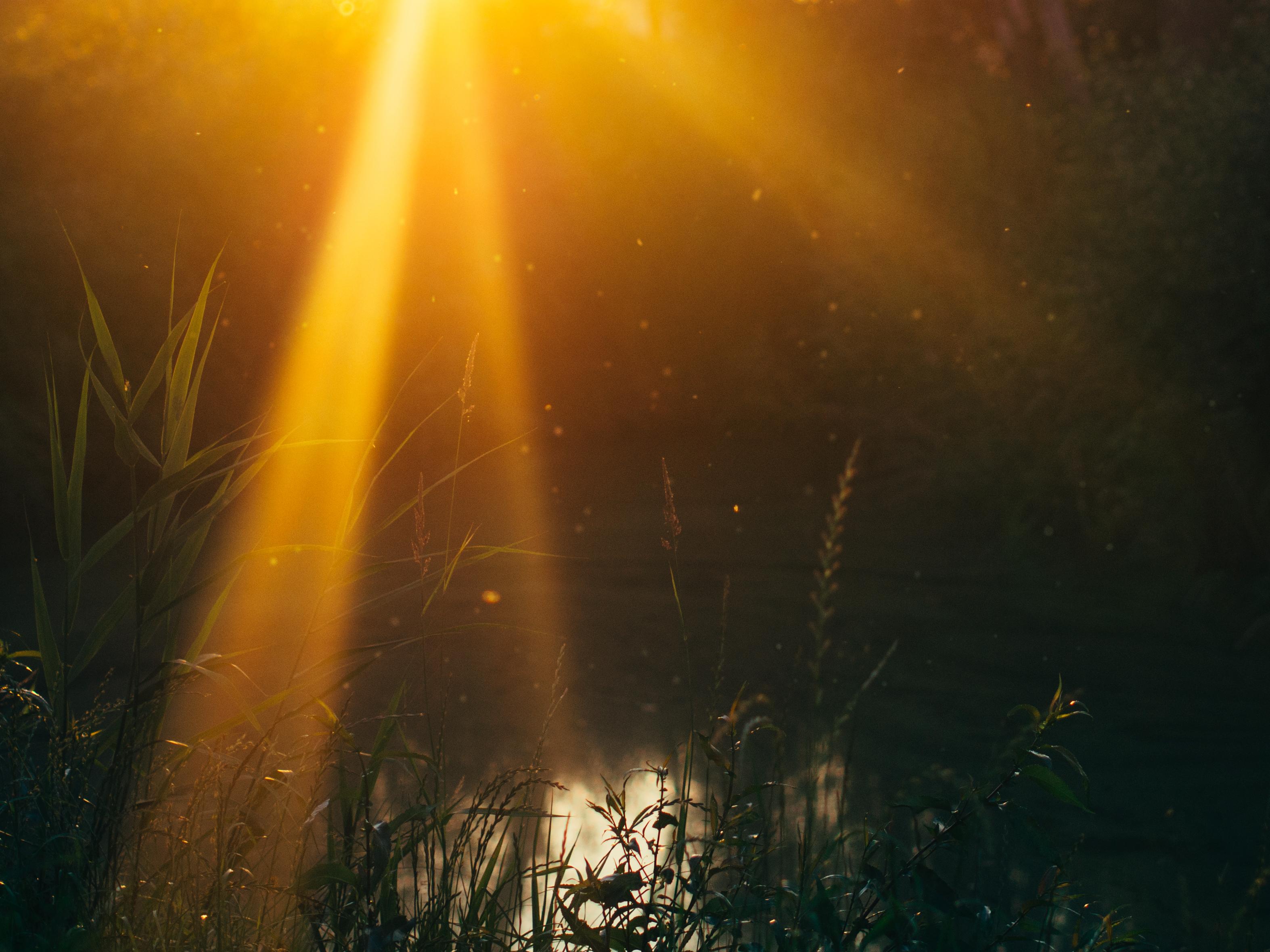 Солнечный свет на земле картинки