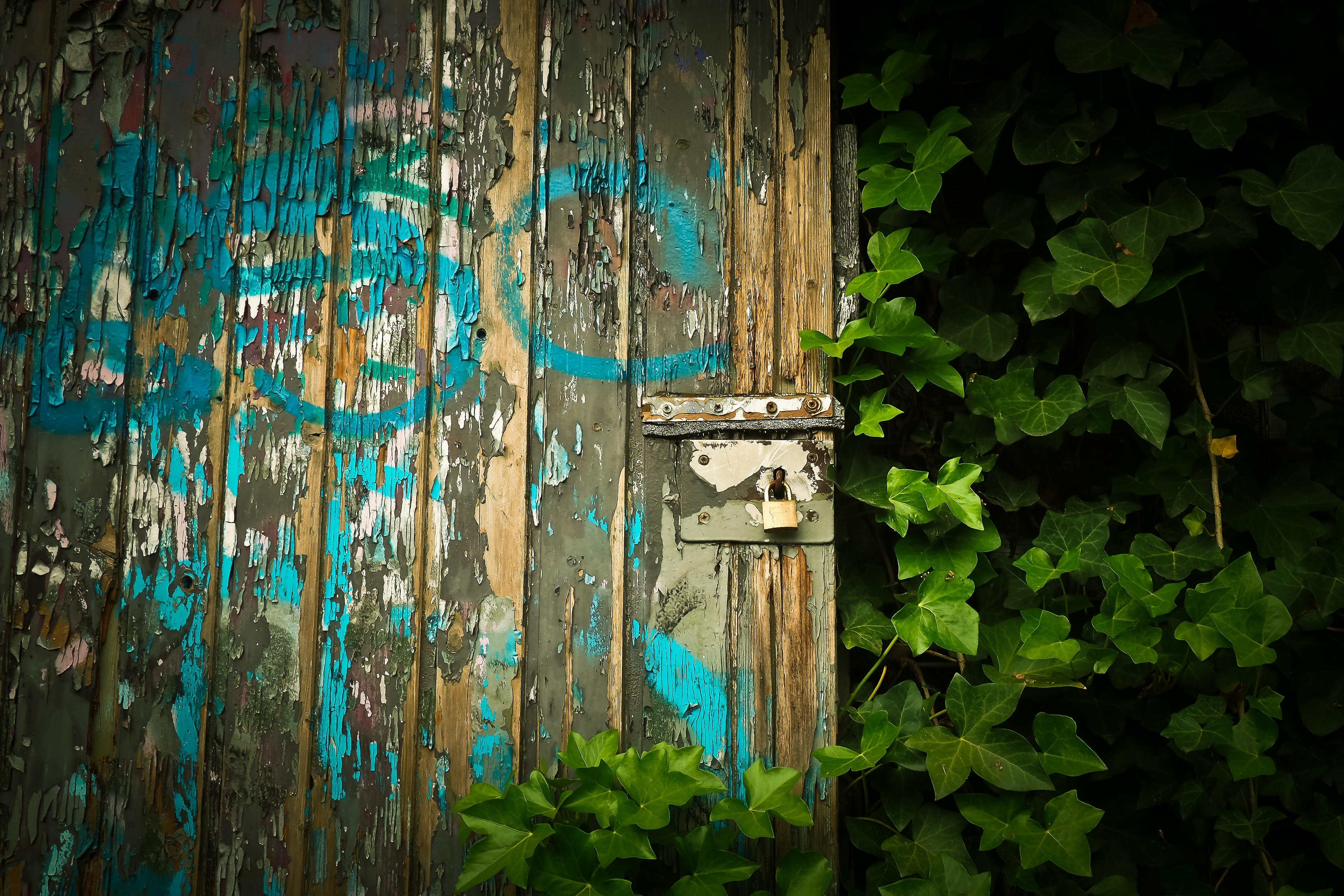 Kostenlose Foto Natur Licht Holz Fenster Alt Mauer Grun