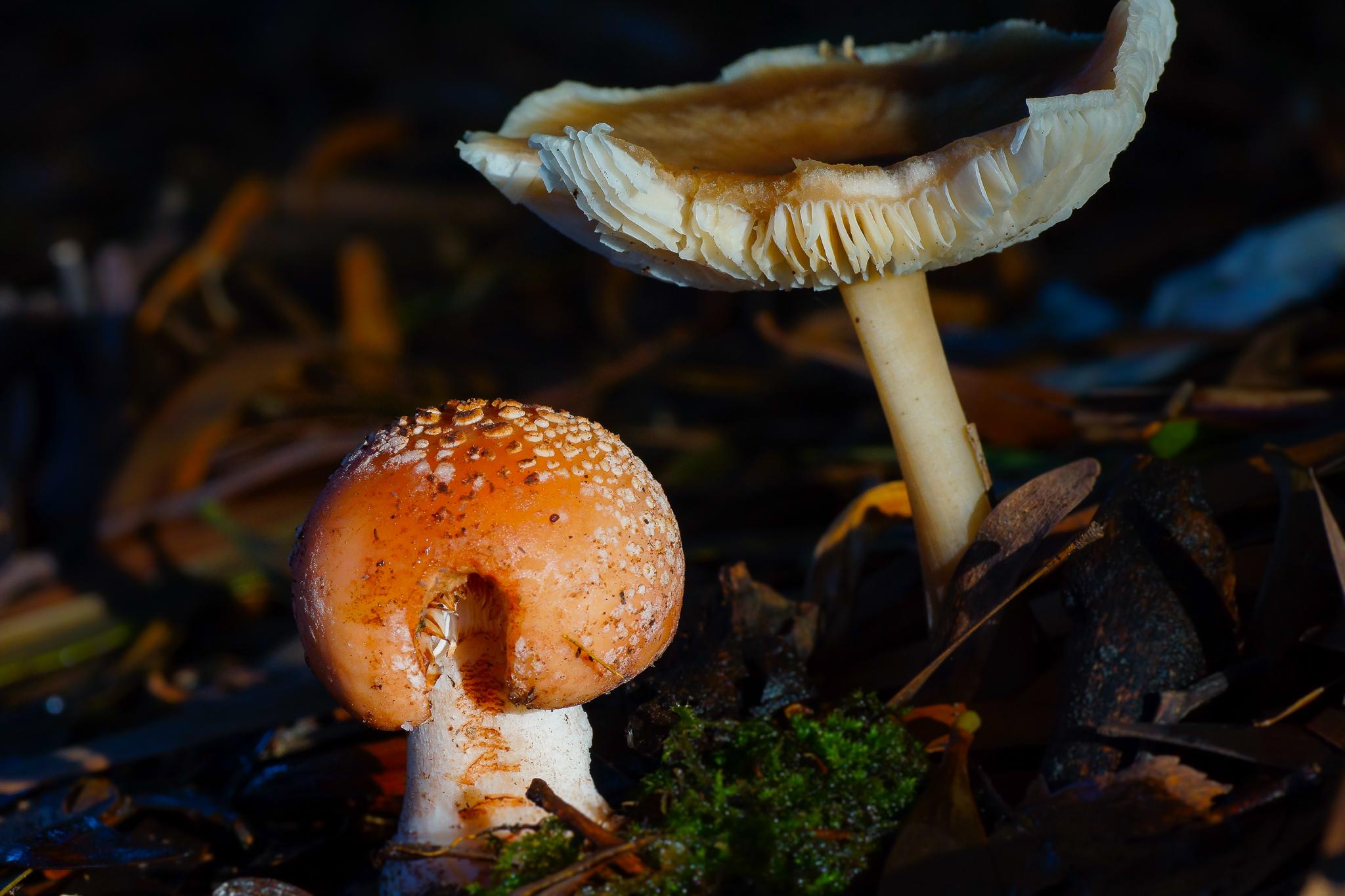 Показать очень красивые картинки съедобных грибов