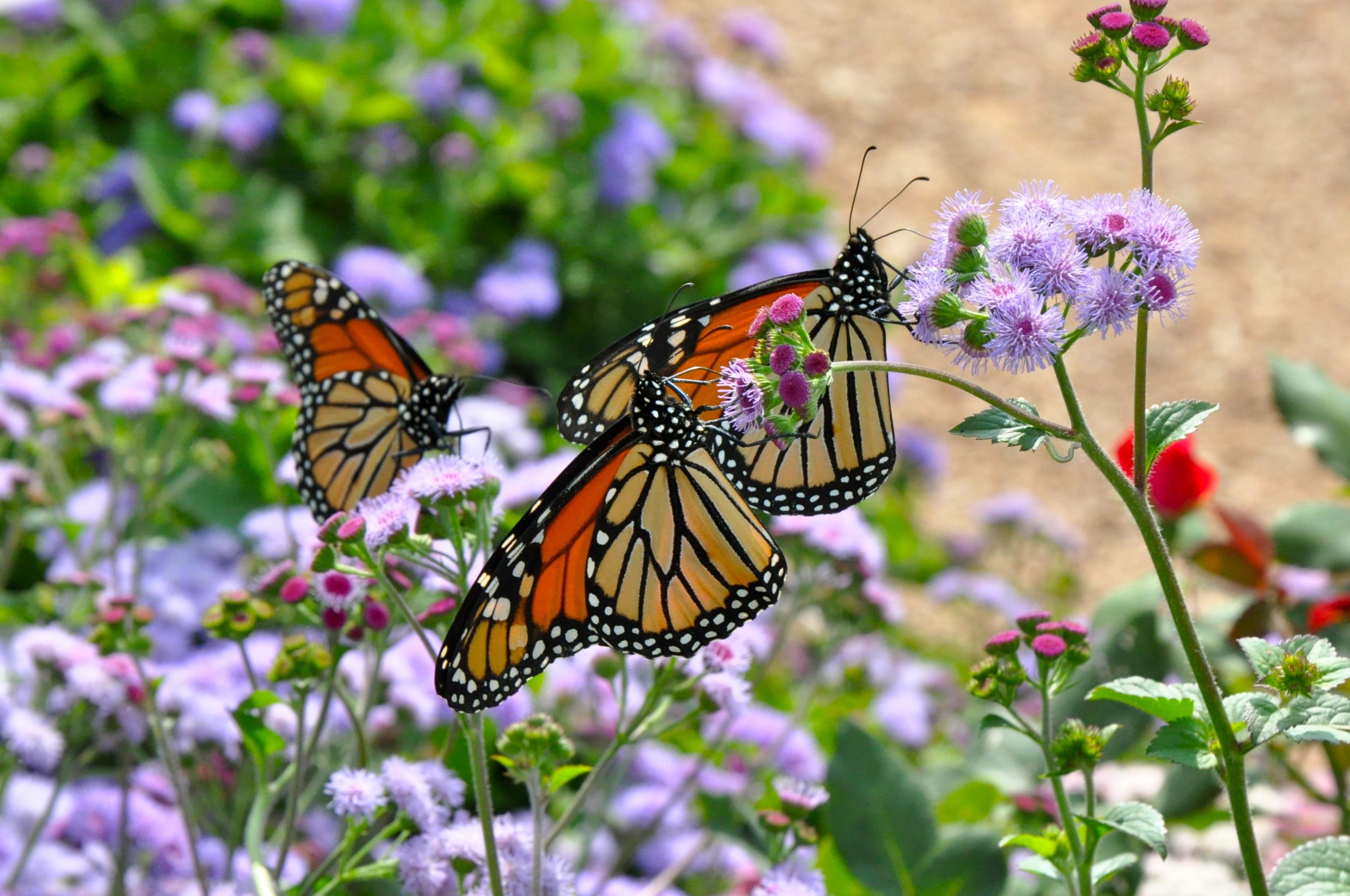 Картинки природы цветы и бабочки