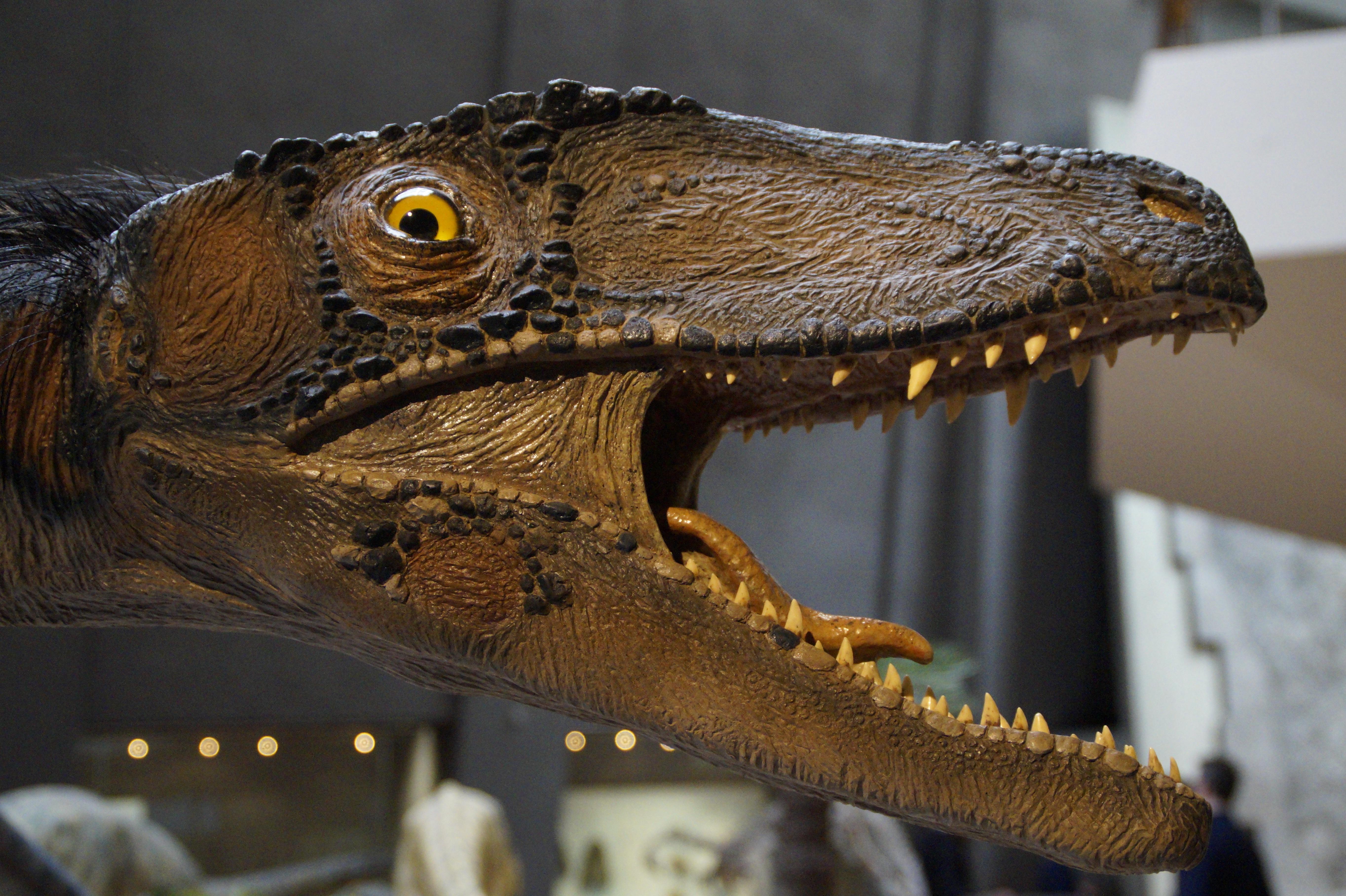 Natural History Museum Dinosaur Removal