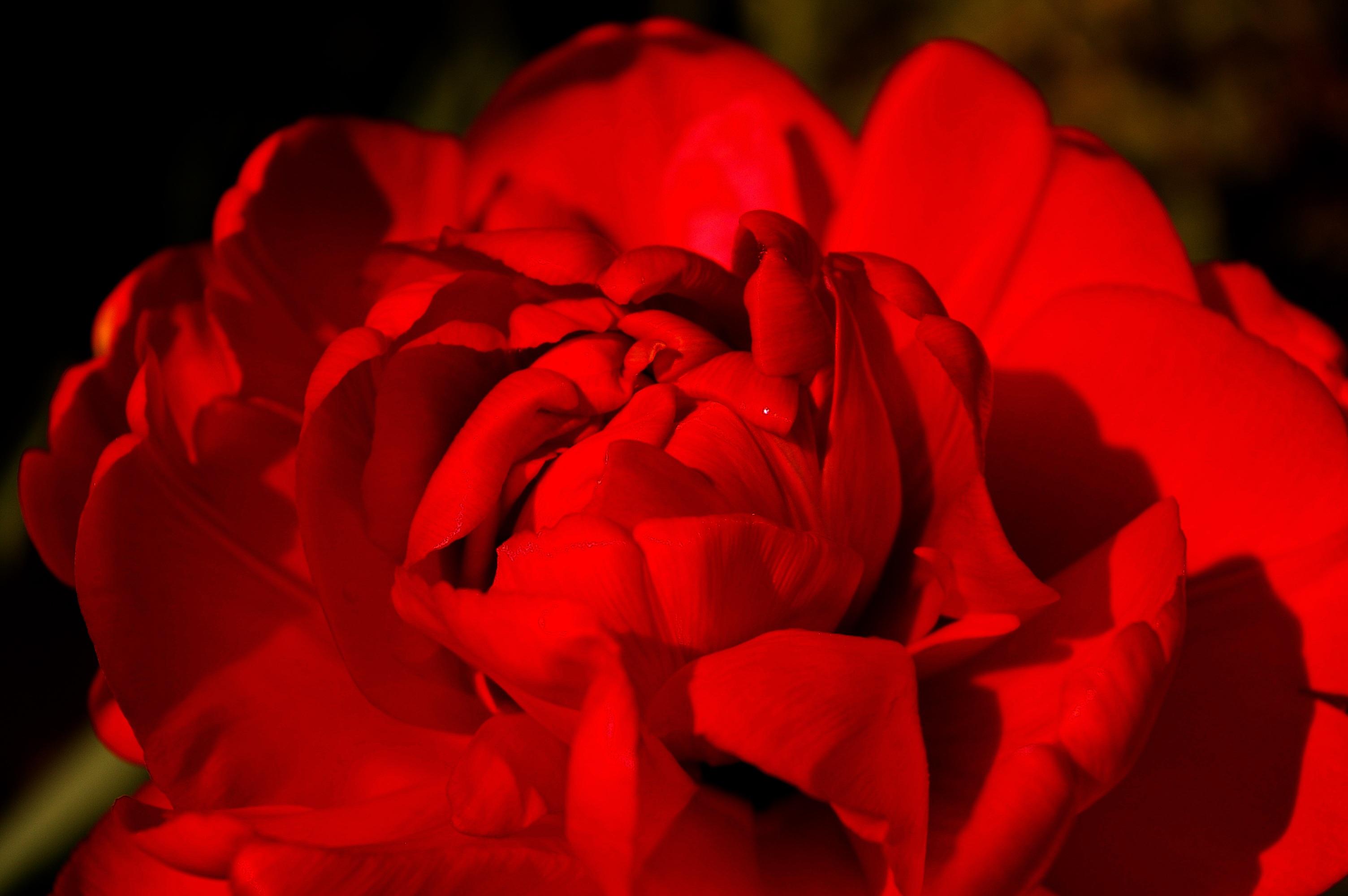 Free images nature open petal color botany colorful pink free images nature open petal color botany colorful pink flora flower bed close up farbenpracht petals bright beautiful exotic flower izmirmasajfo