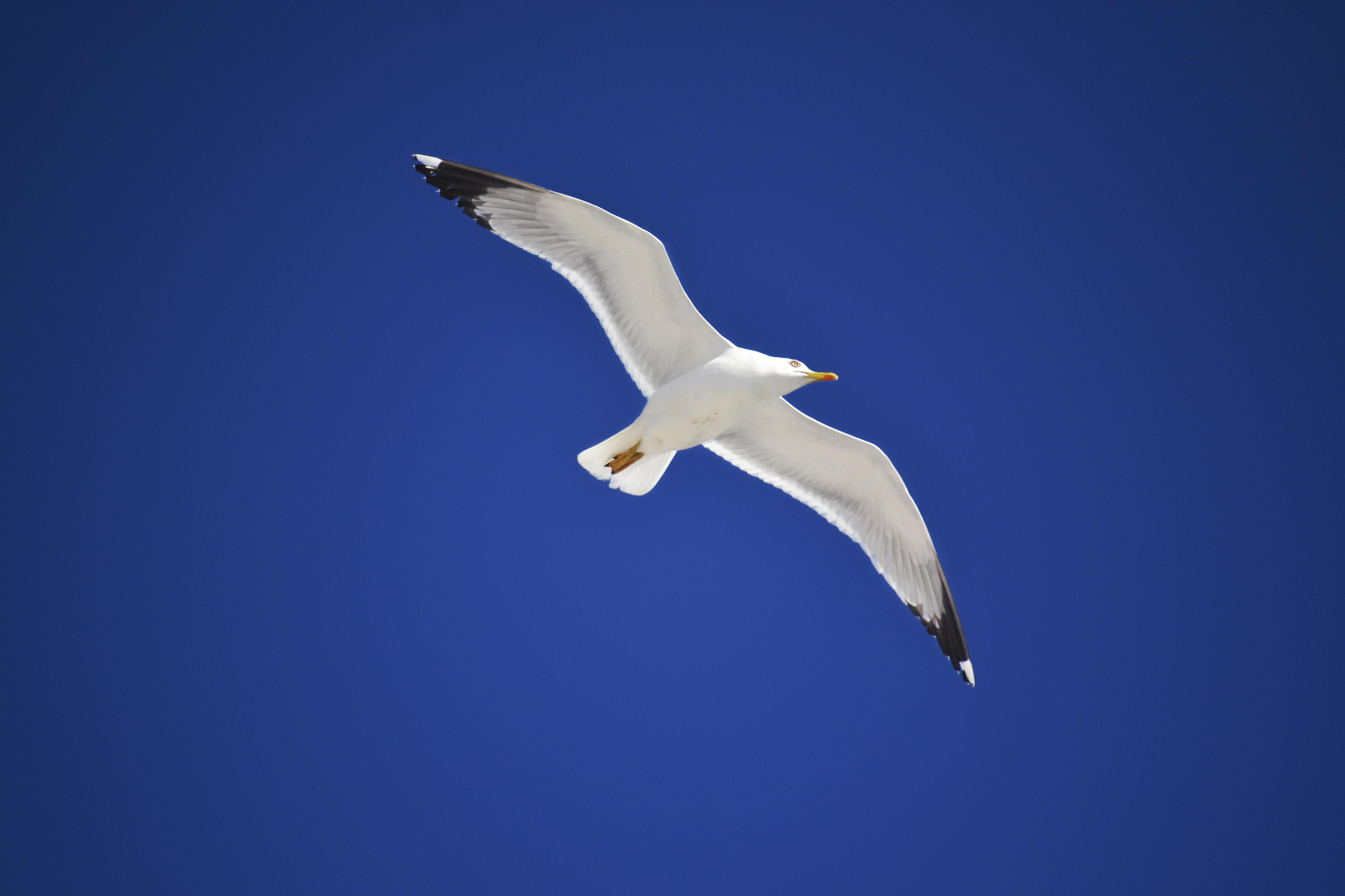 хочется картинки белая птица в небе нужно помнить, что