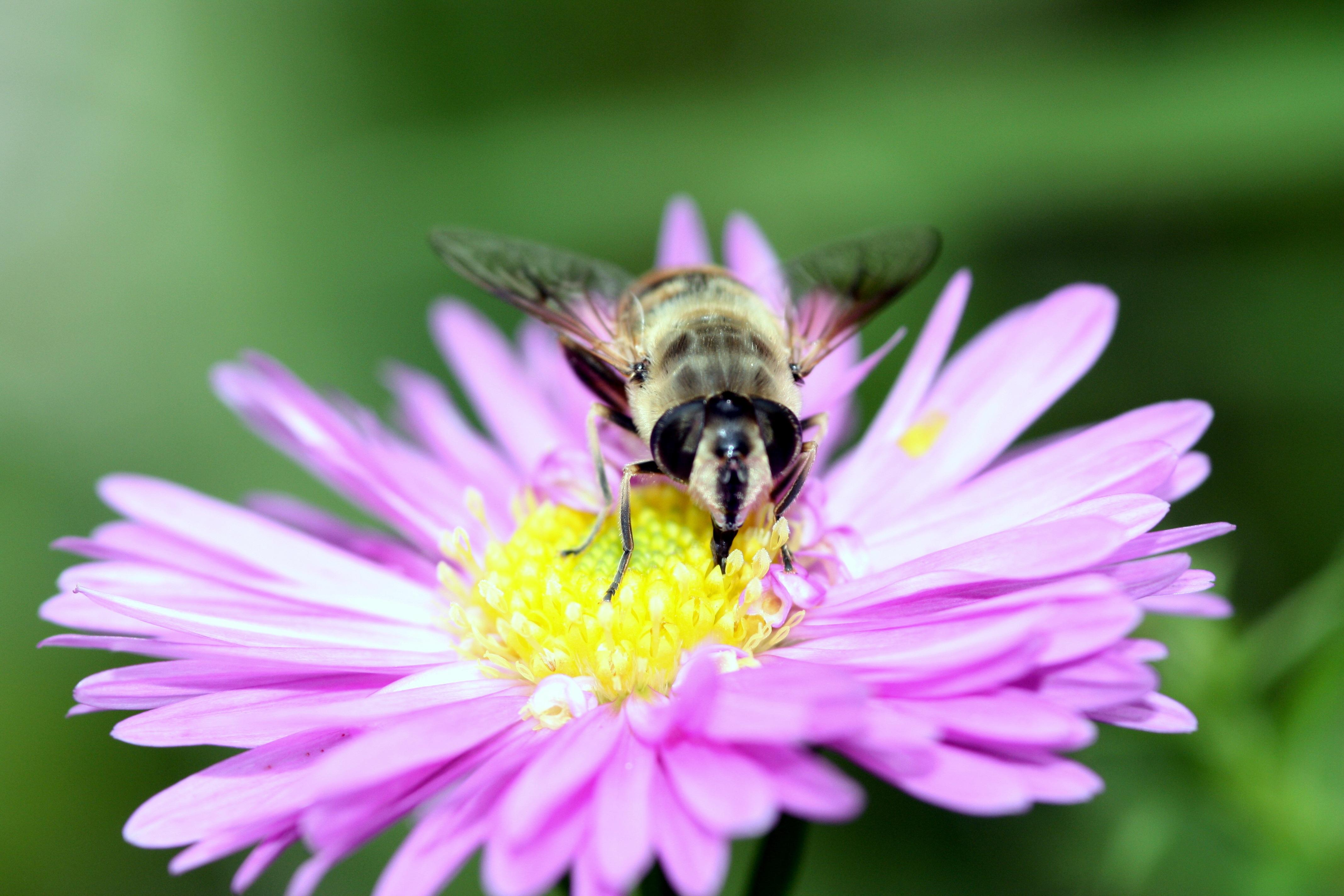 Free Images : nature, outdoor, blossom, light, plant, flower, petal ...