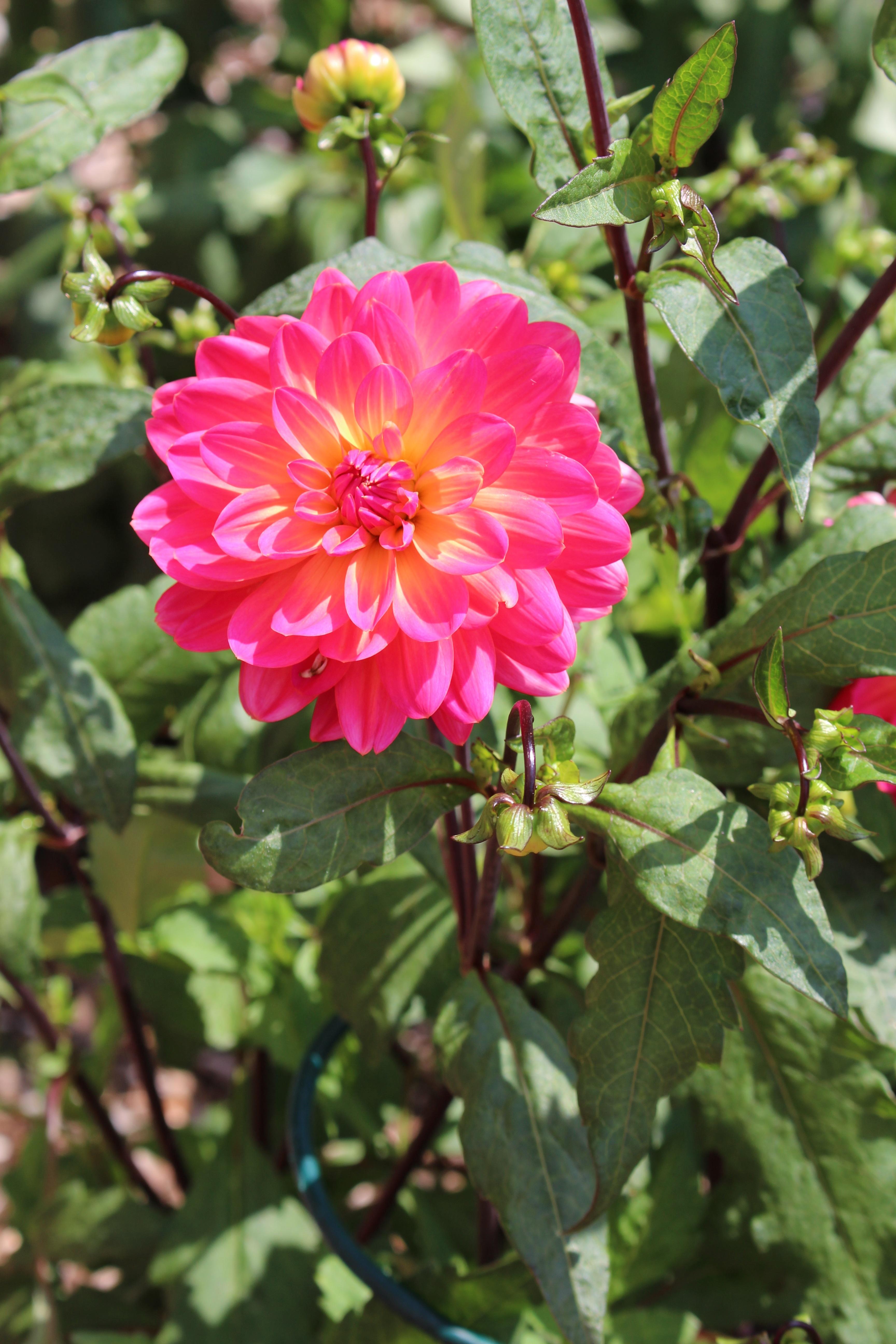 Kostenlose foto : Natur, draussen, blühen, Blume, Blütenblatt ...