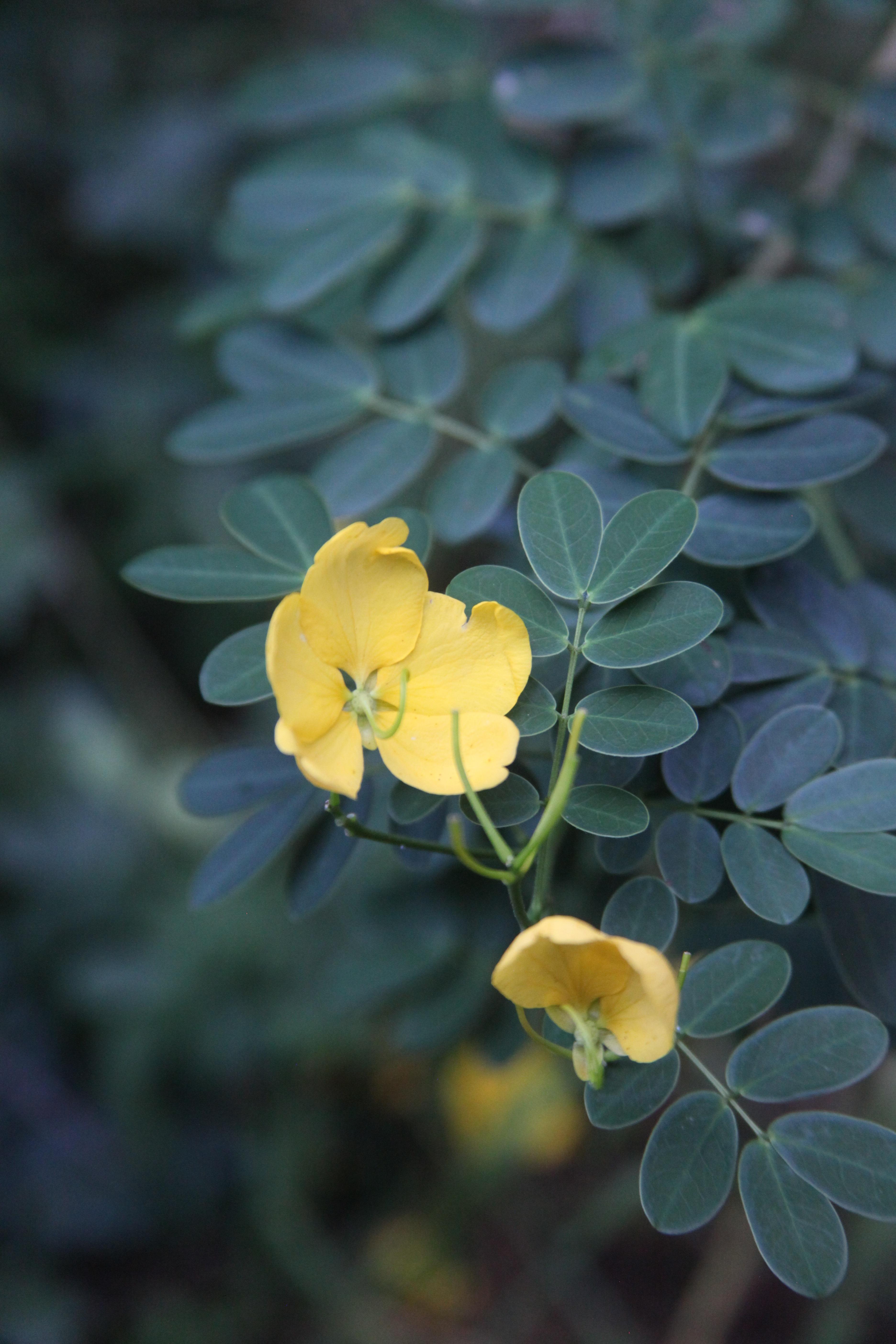 Free Images Nature Outdoor Blossom Leaf Flower Petal Bloom