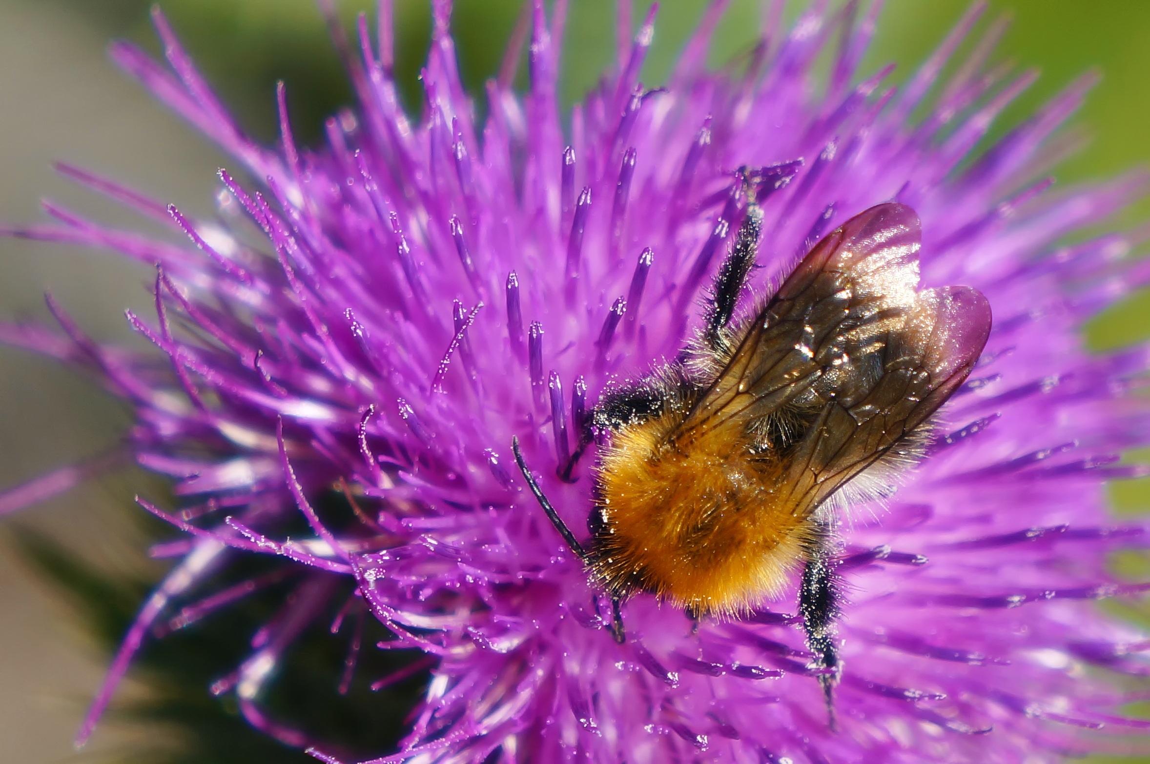 kostenlose foto natur draussen bl hen fotografie blume lila bl tenblatt sommer pollen. Black Bedroom Furniture Sets. Home Design Ideas