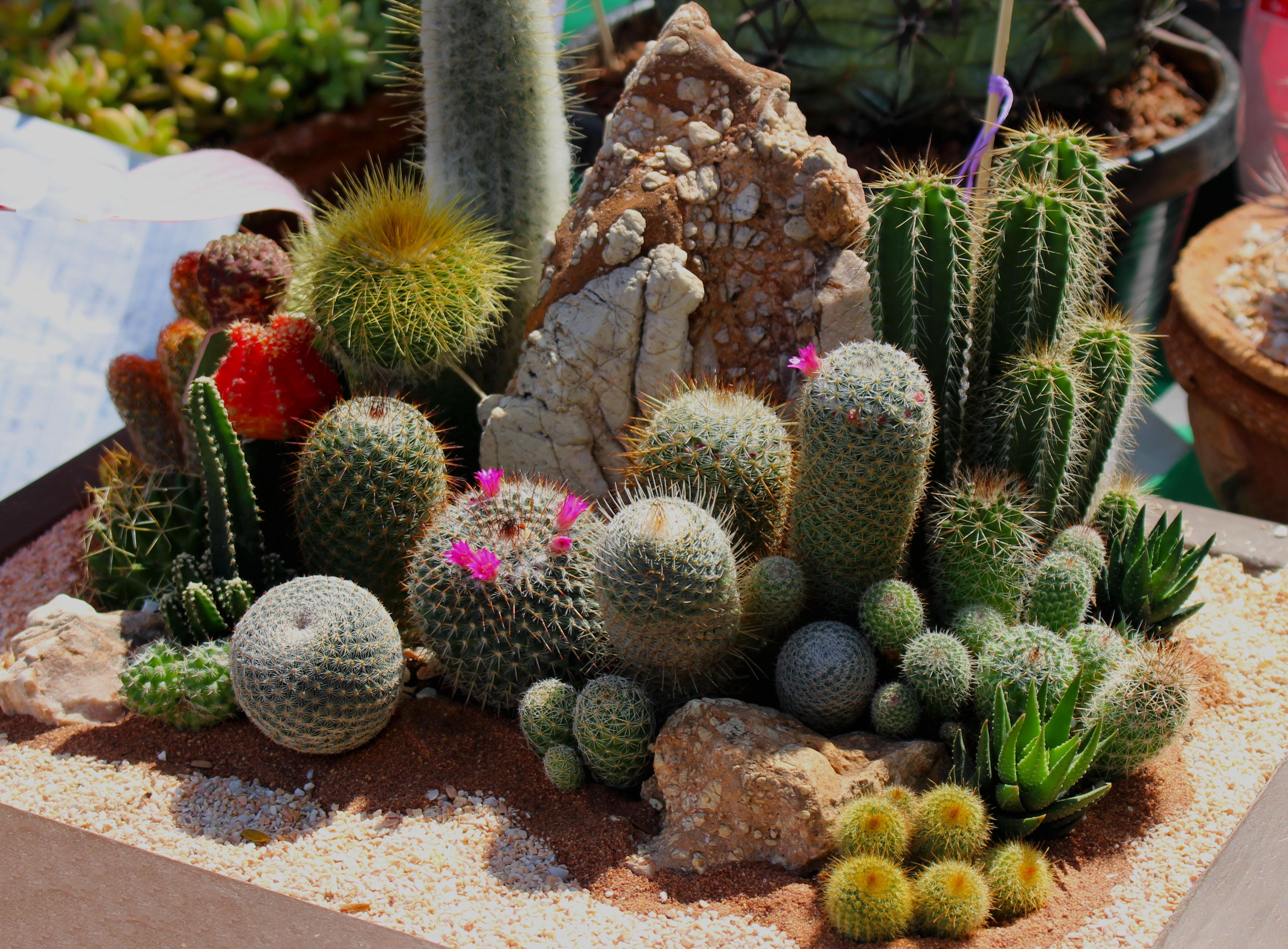 Free Images : nature, outdoor, growth, sunlight, desert, flower ...