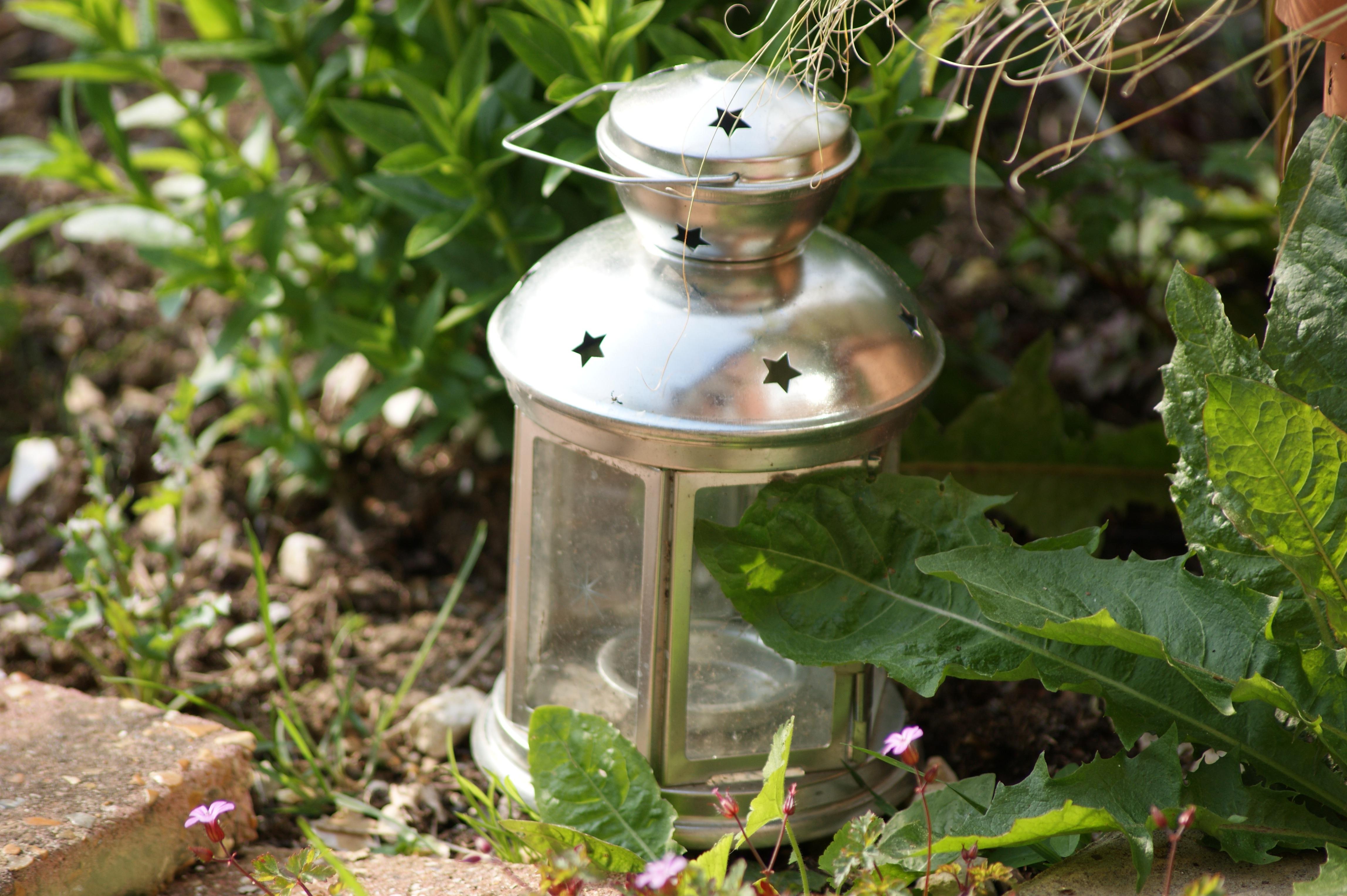 Kostenlose Foto Natur Draussen Licht Rasen Blume