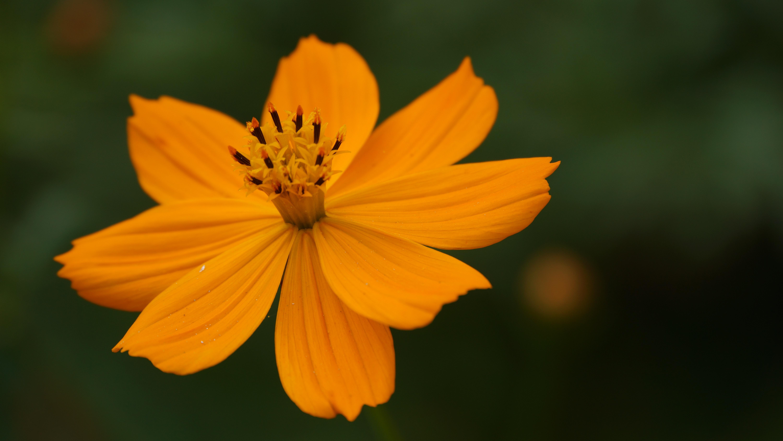 Free Images Outdoor Open Sunlight Flower Petal Cute Herb