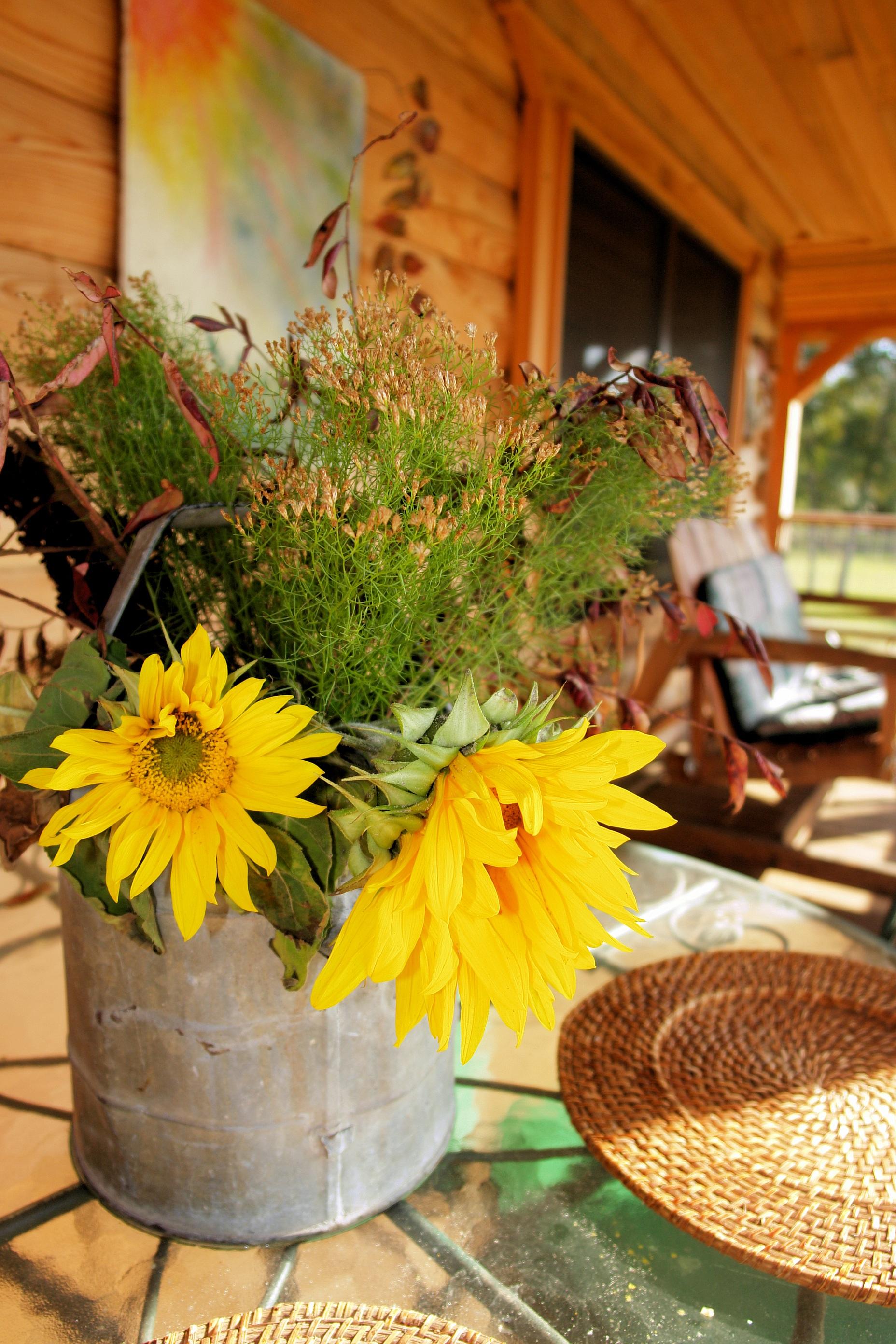 Images Gratuites La Nature De Plein Air Plante Ferme Campagne Fleur Pays T Rural