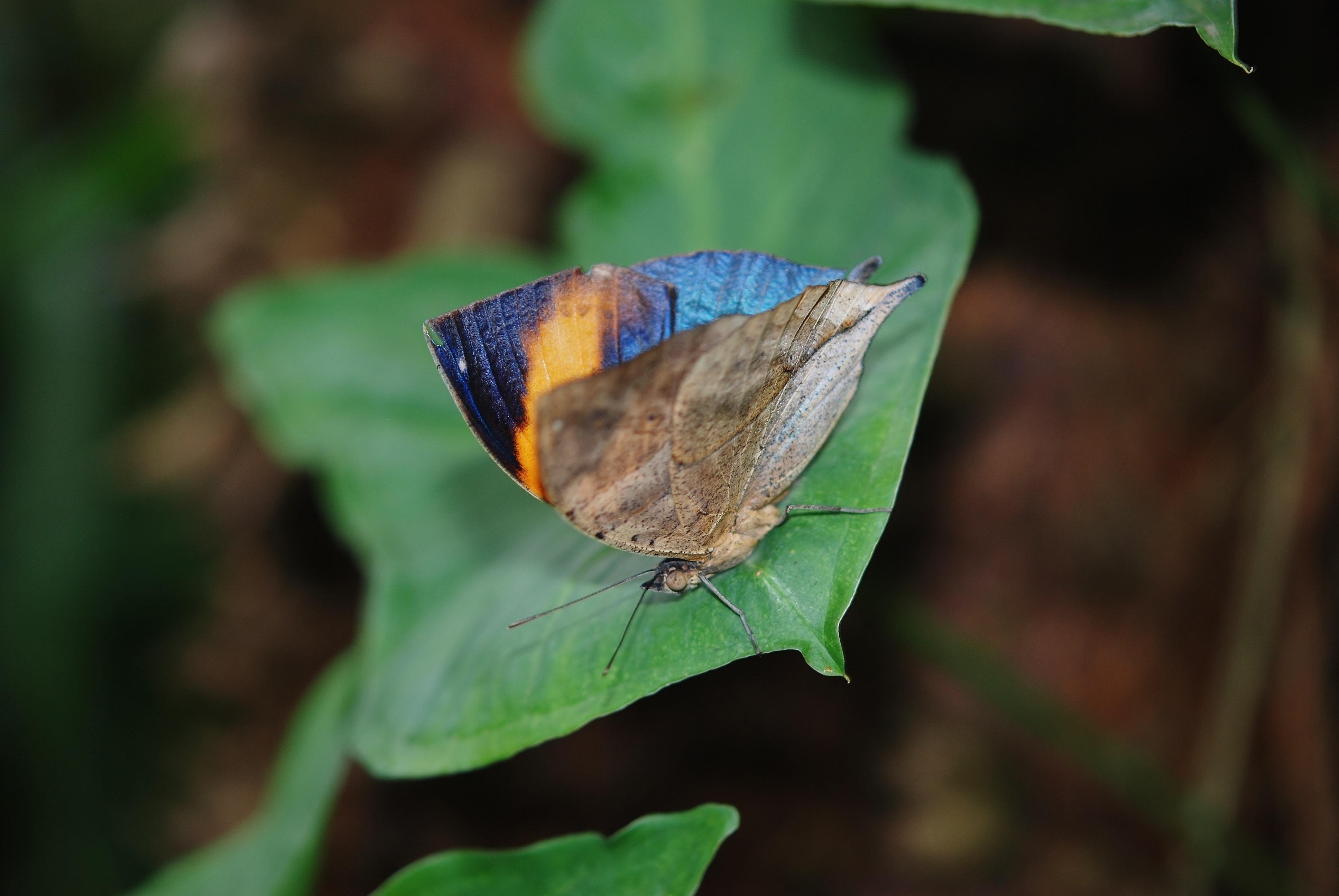 Images gratuites la nature de plein air aile la photographie feuille fleur faune - Duree de vie papillon de nuit ...