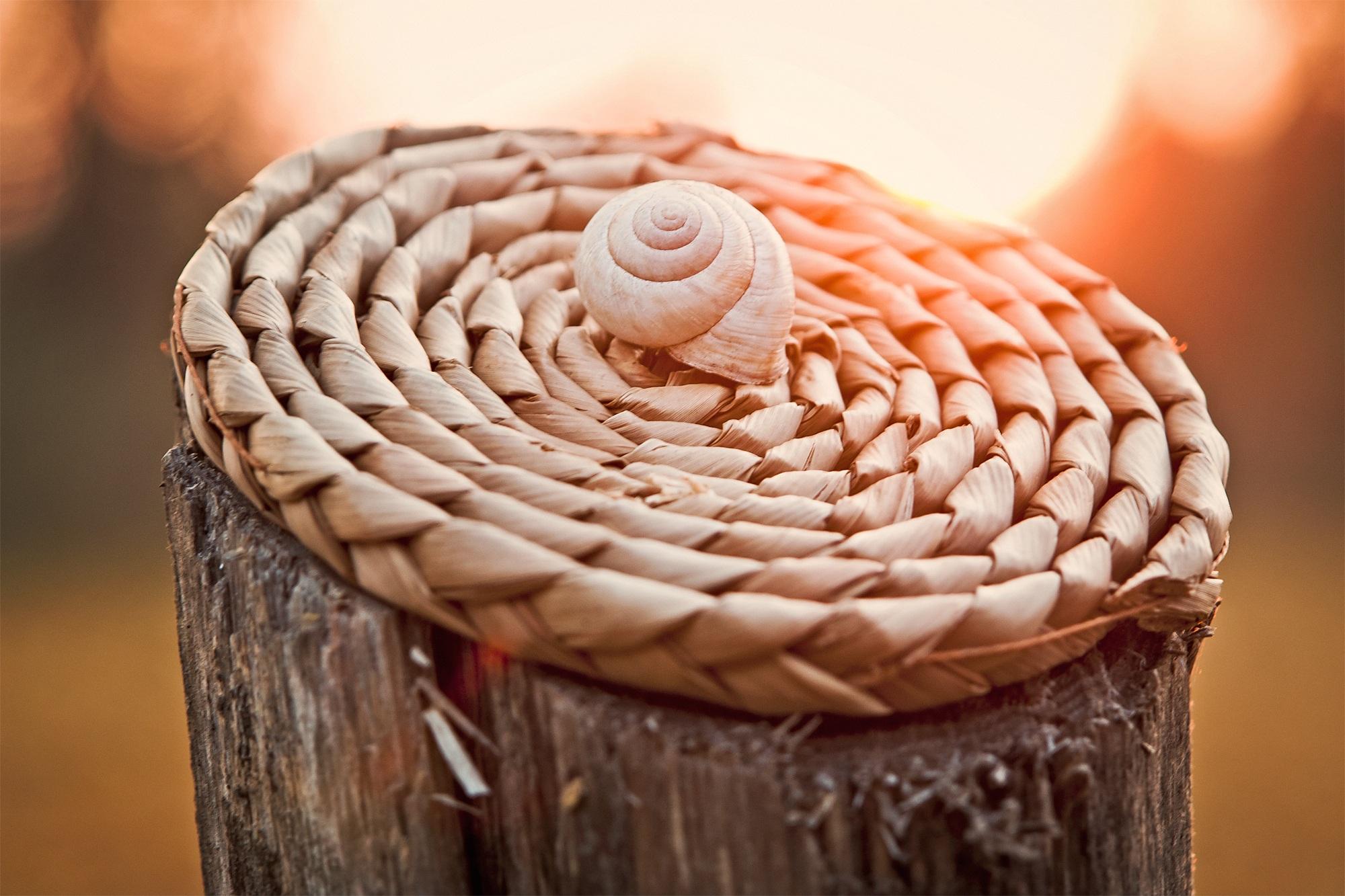Fotos gratis : naturaleza, al aire libre, madera, amanecer, espiral ...