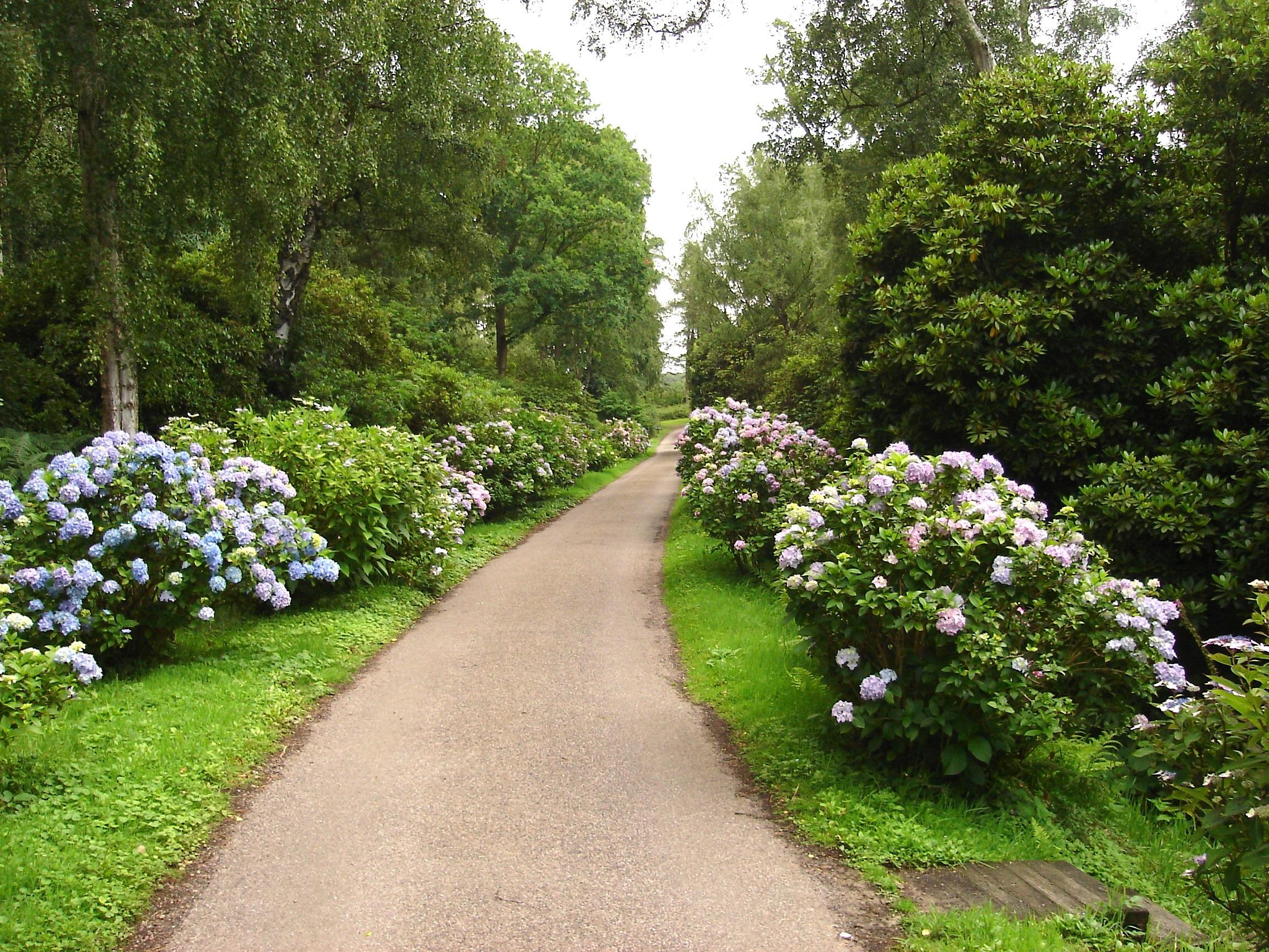 Images gratuites la nature chemin fleur pelouse voie for Arboles y arbustos para jardin