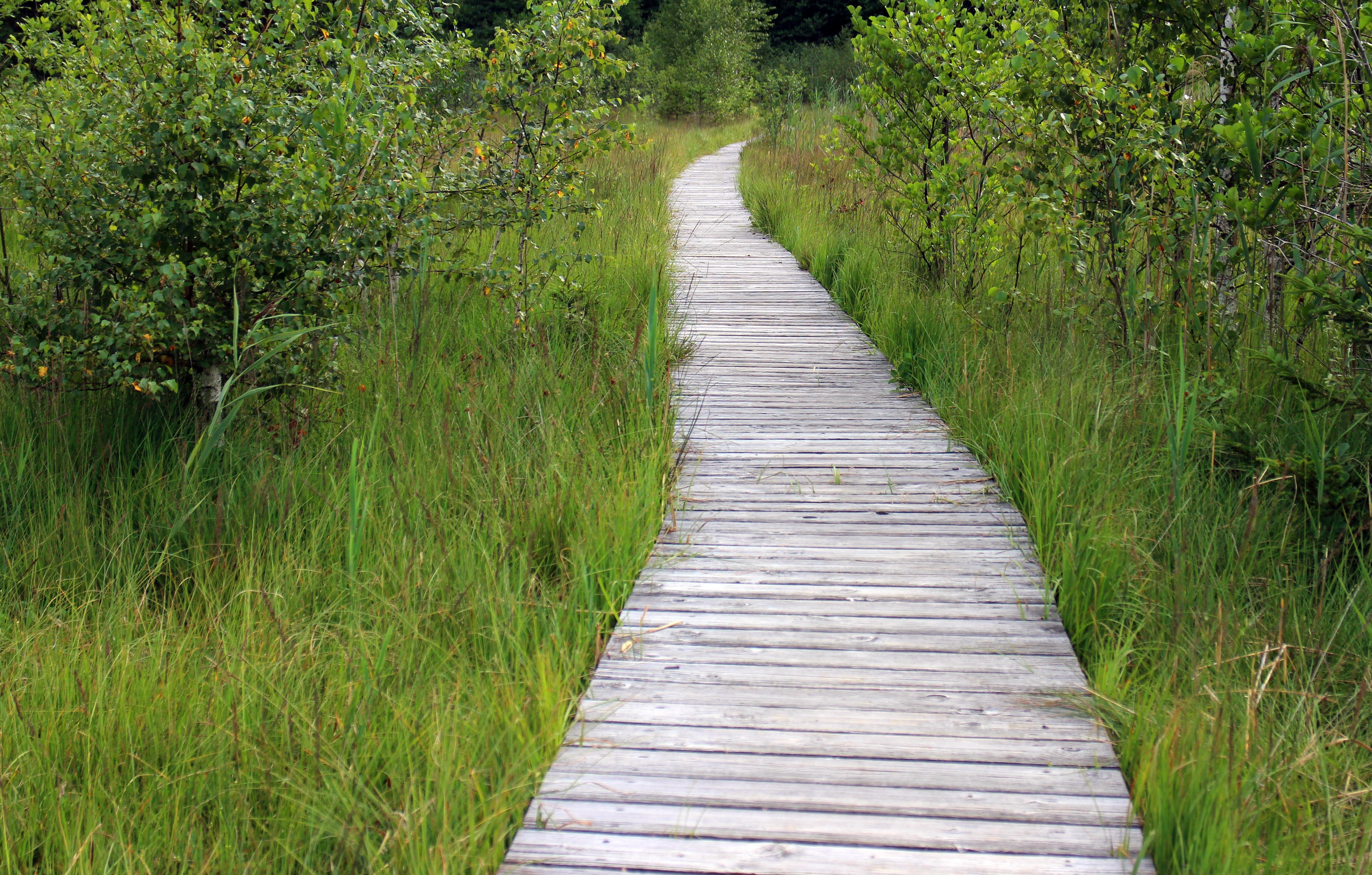 Fotos gratis naturaleza césped sendero prado río