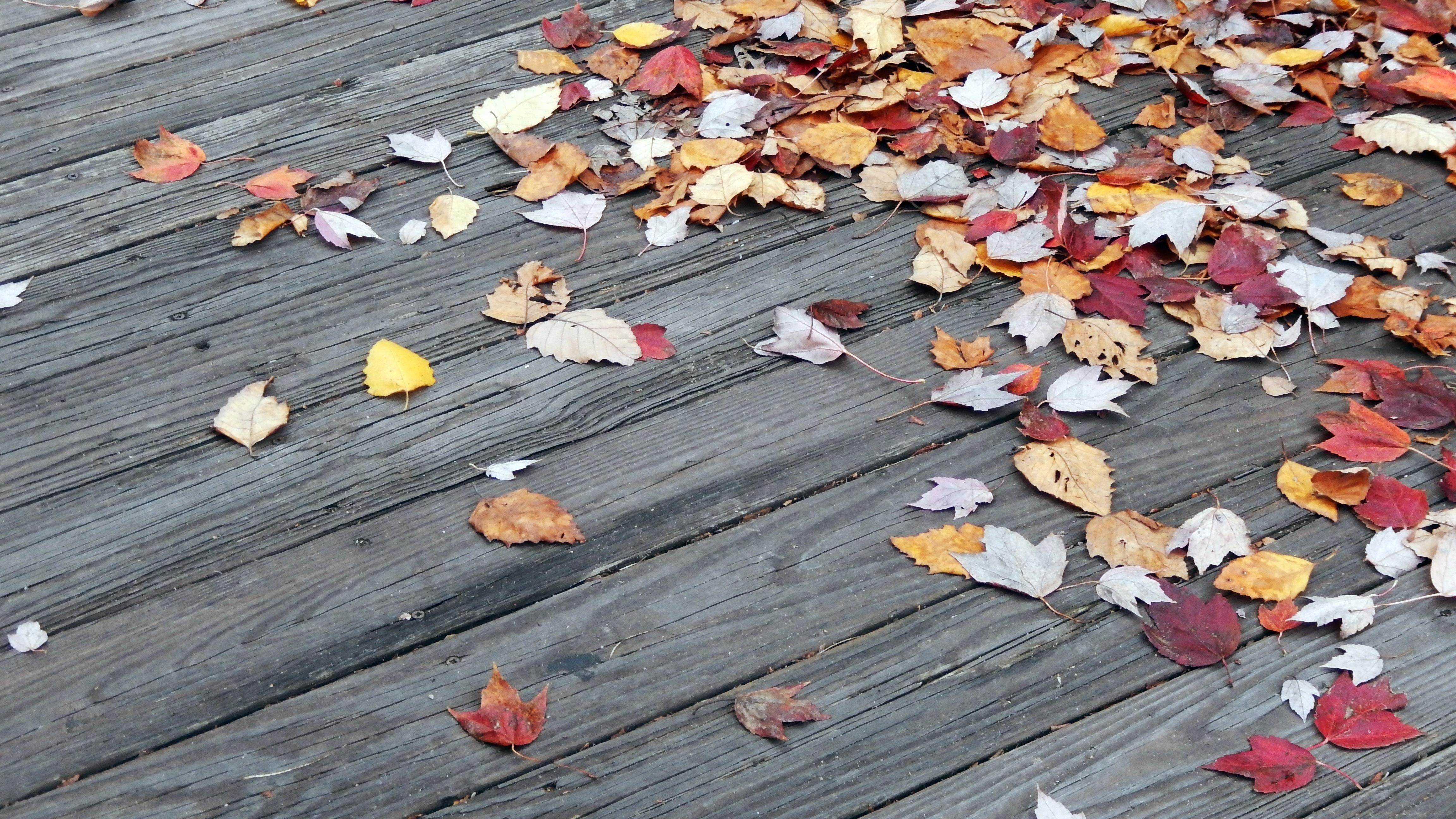 ...эта осень