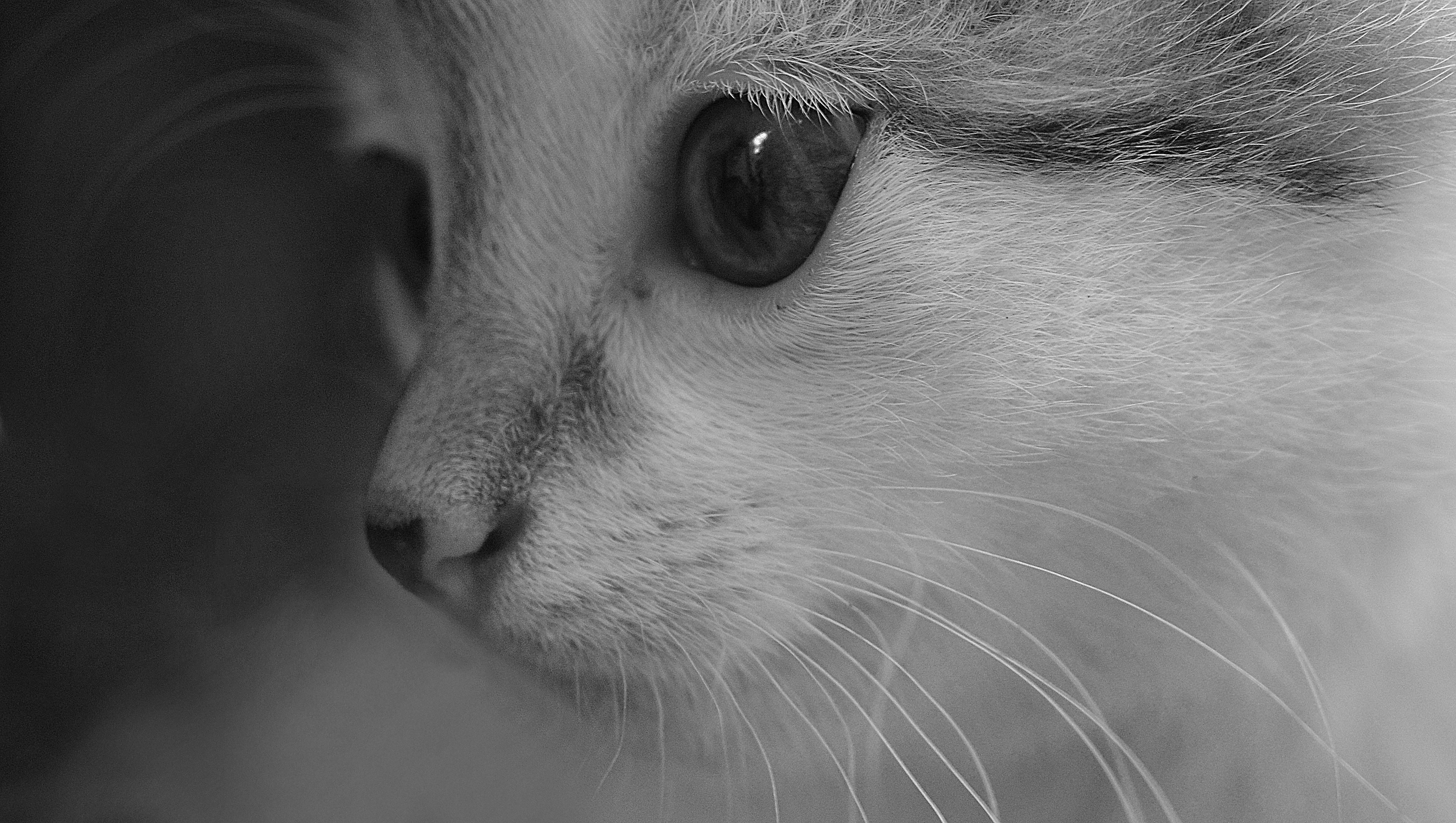 Černá dívka kočička fotografie