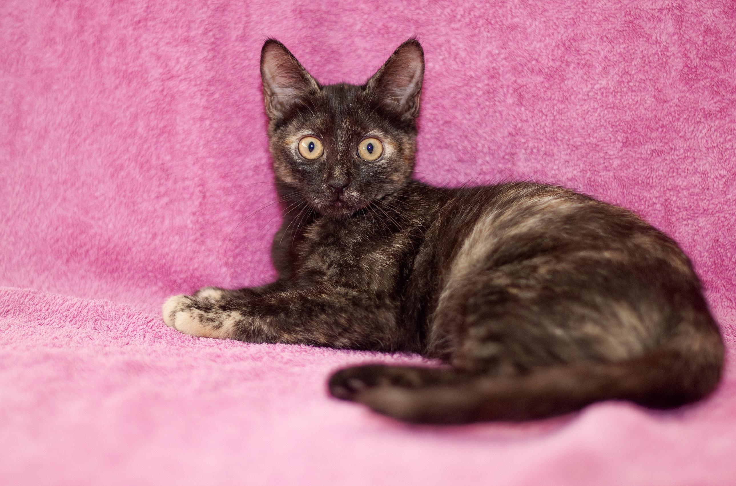 Zadarmo pekné čierne mačička
