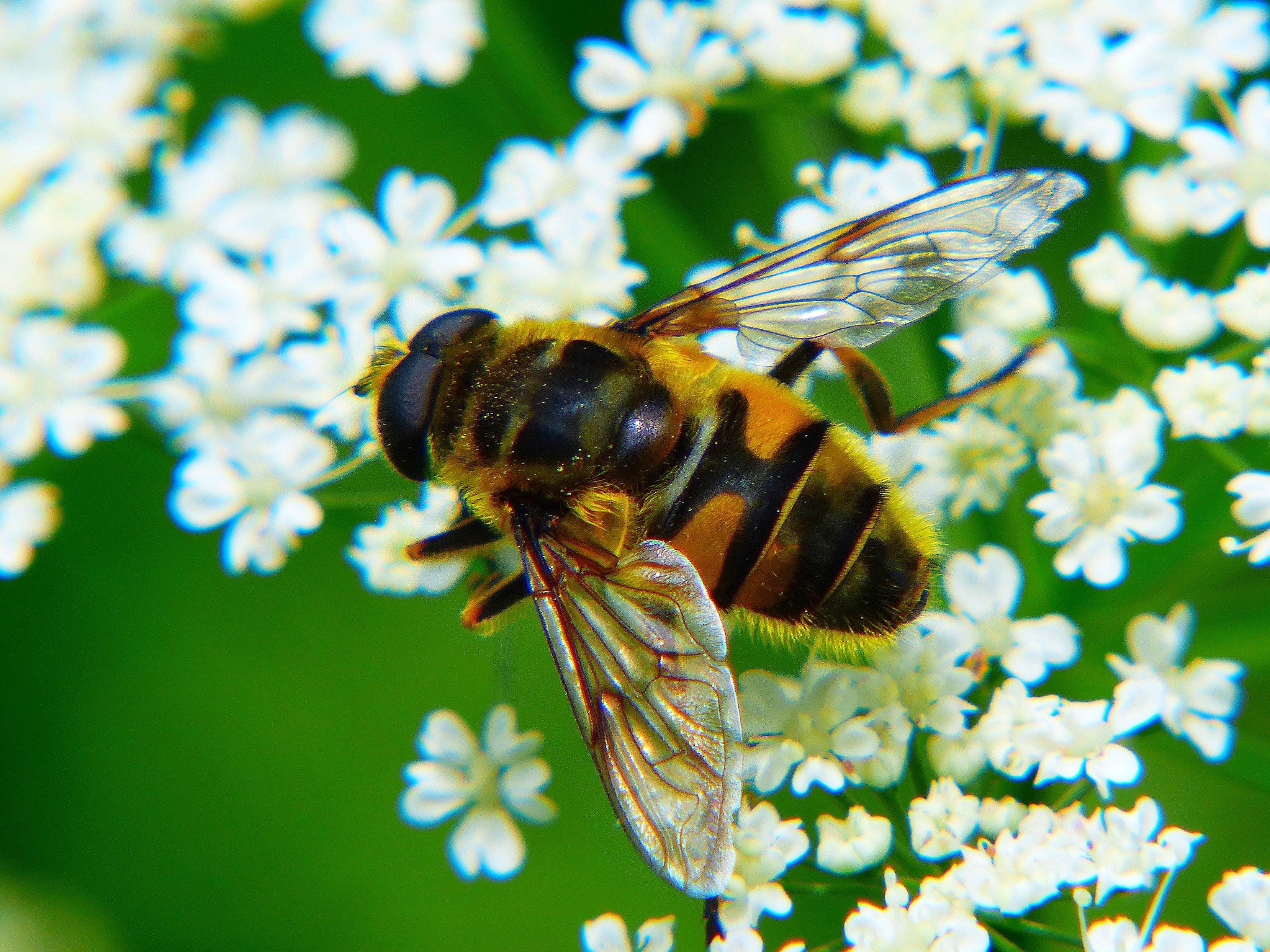 входом русская пчела картинки был