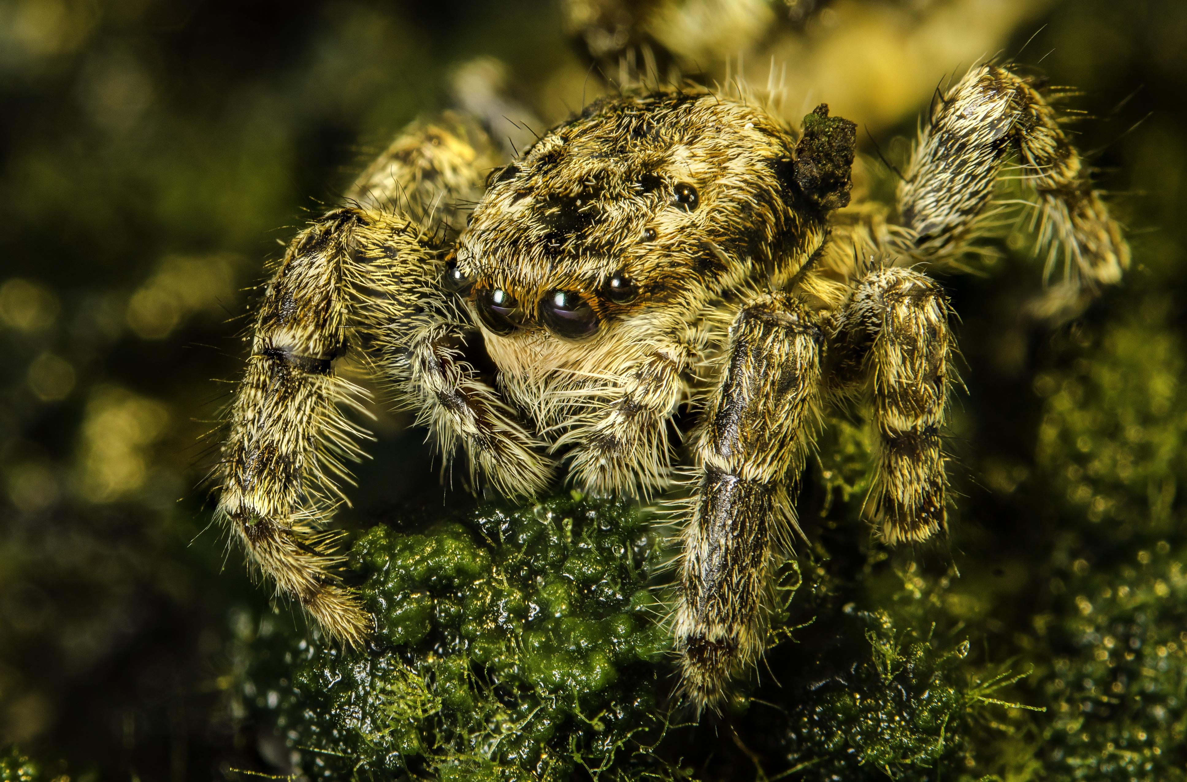 Картинки паука серебрянка груши борьба