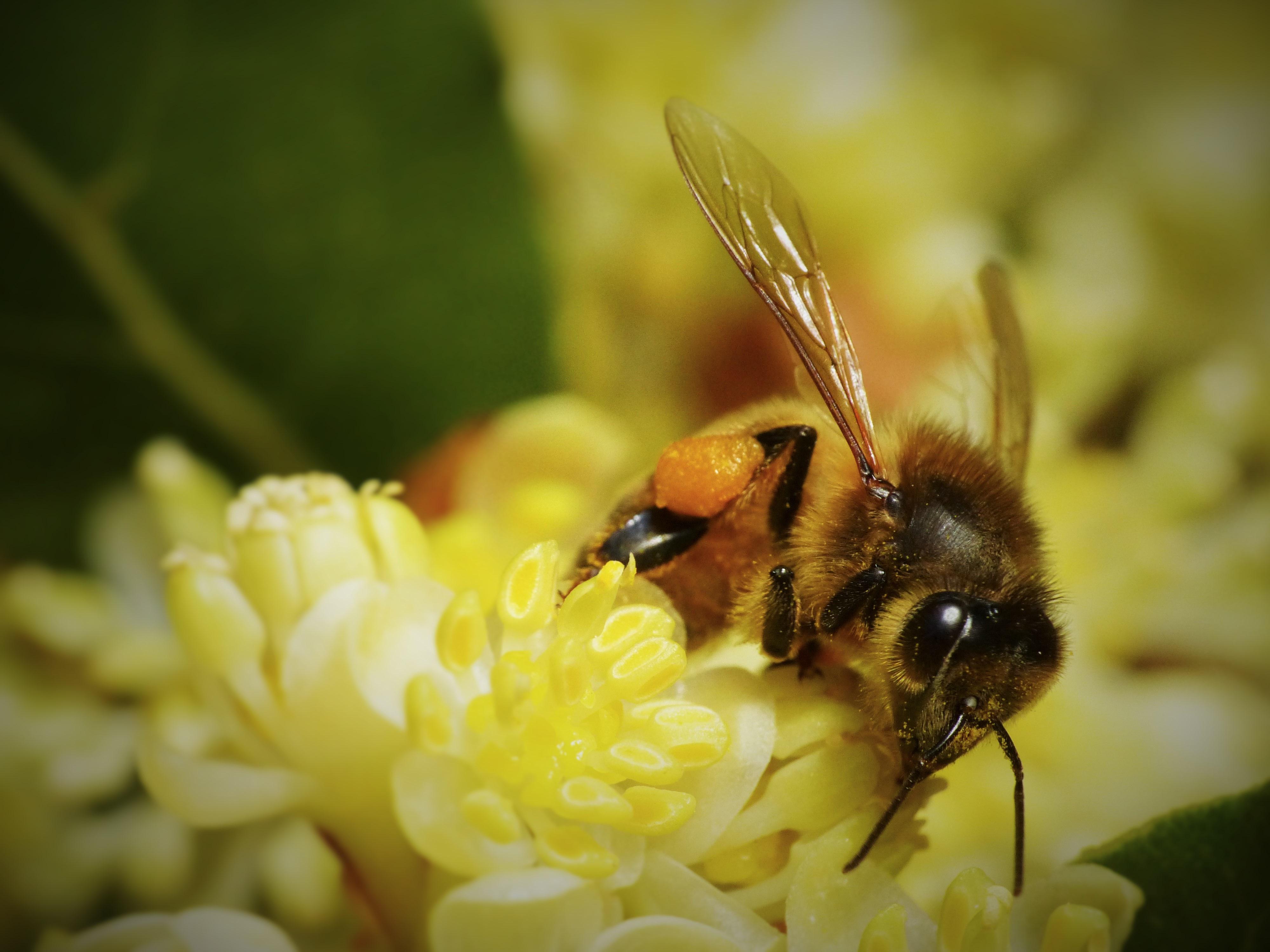 какие русская пчела картинки связано