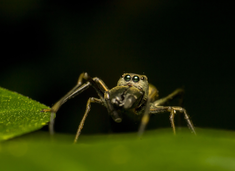 картинки про разных насекомых этого