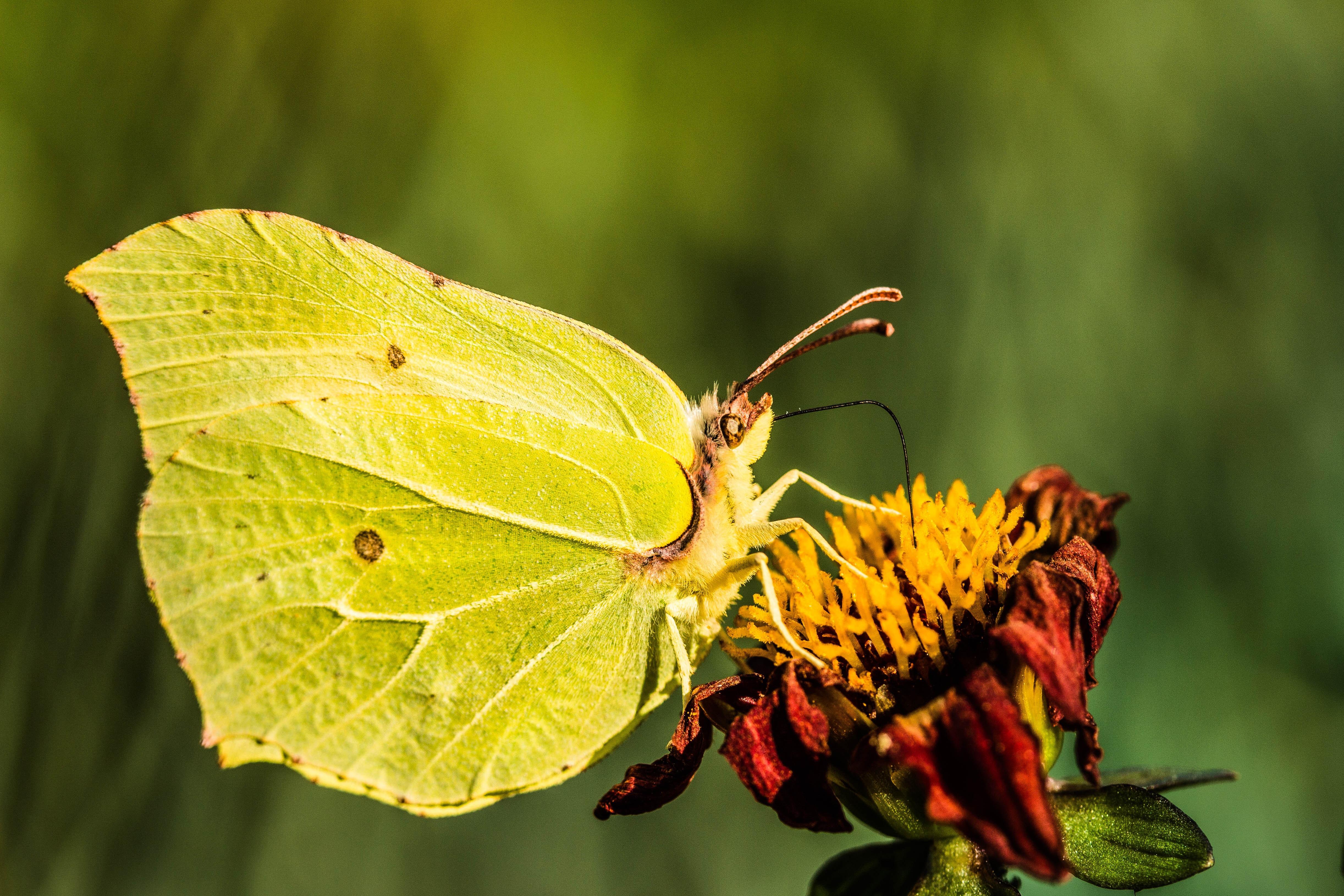 free images nature leaf animal summer insect botany