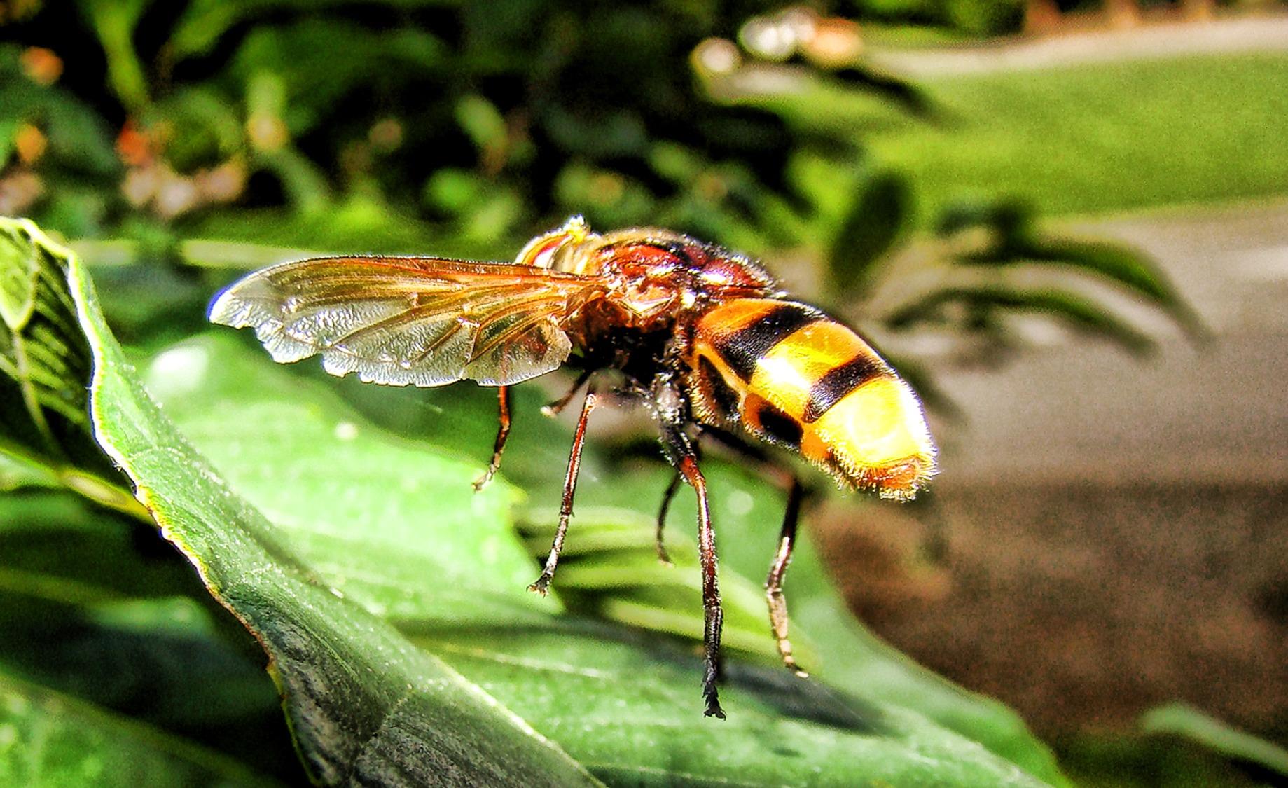 Images gratuites la nature la photographie feuille - Mouche jaune et noire ...
