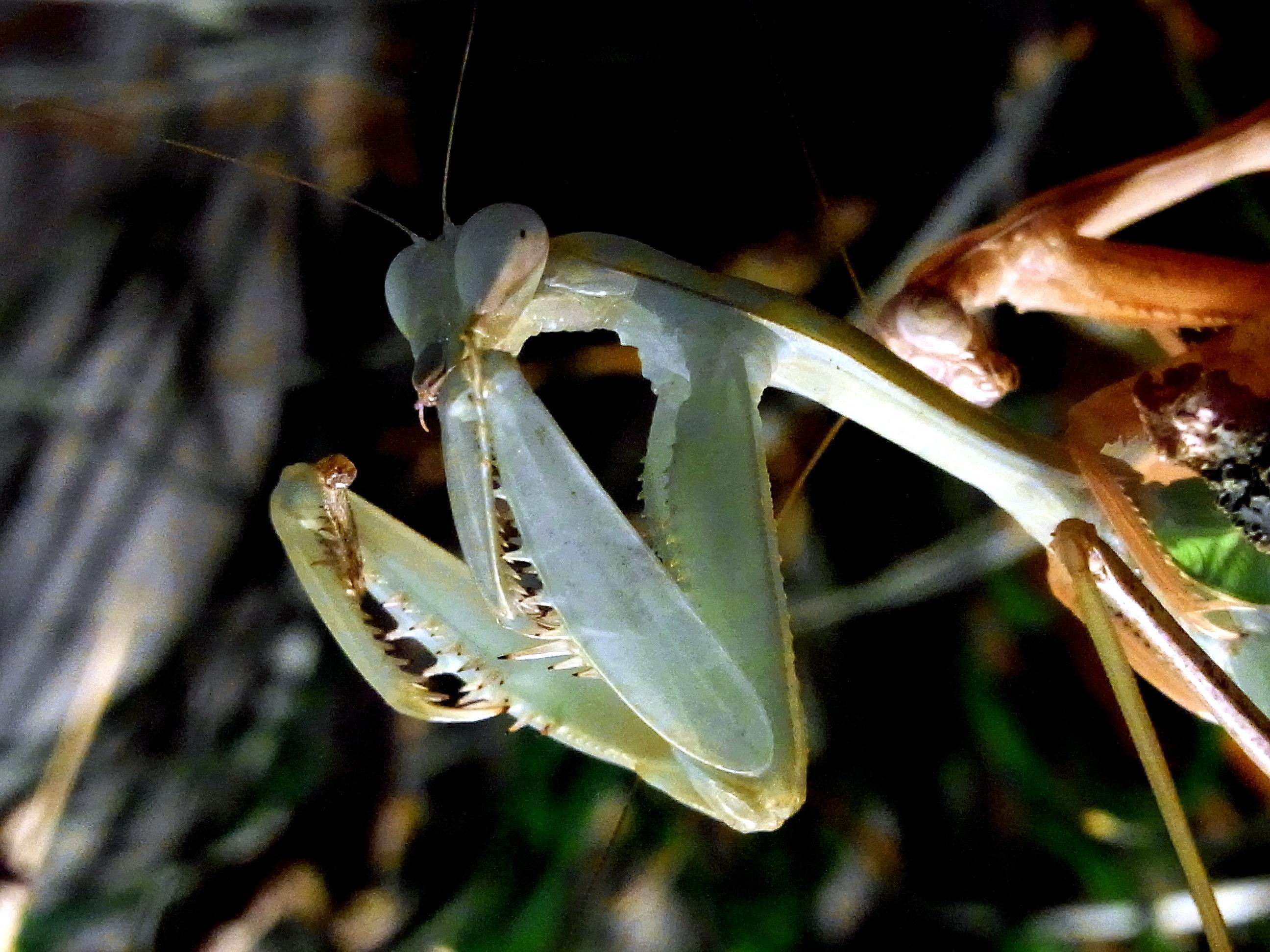 Картинка лапки насекомых