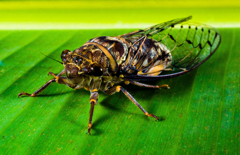 Покажи картинки насекомых