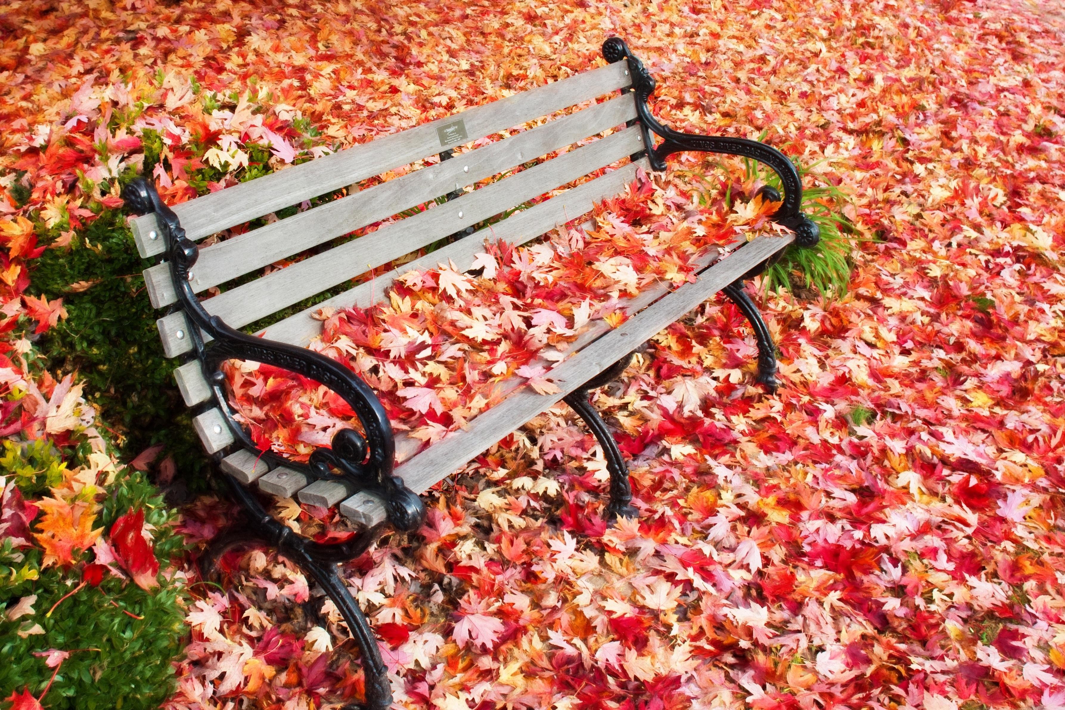 Картинка листья на скамье