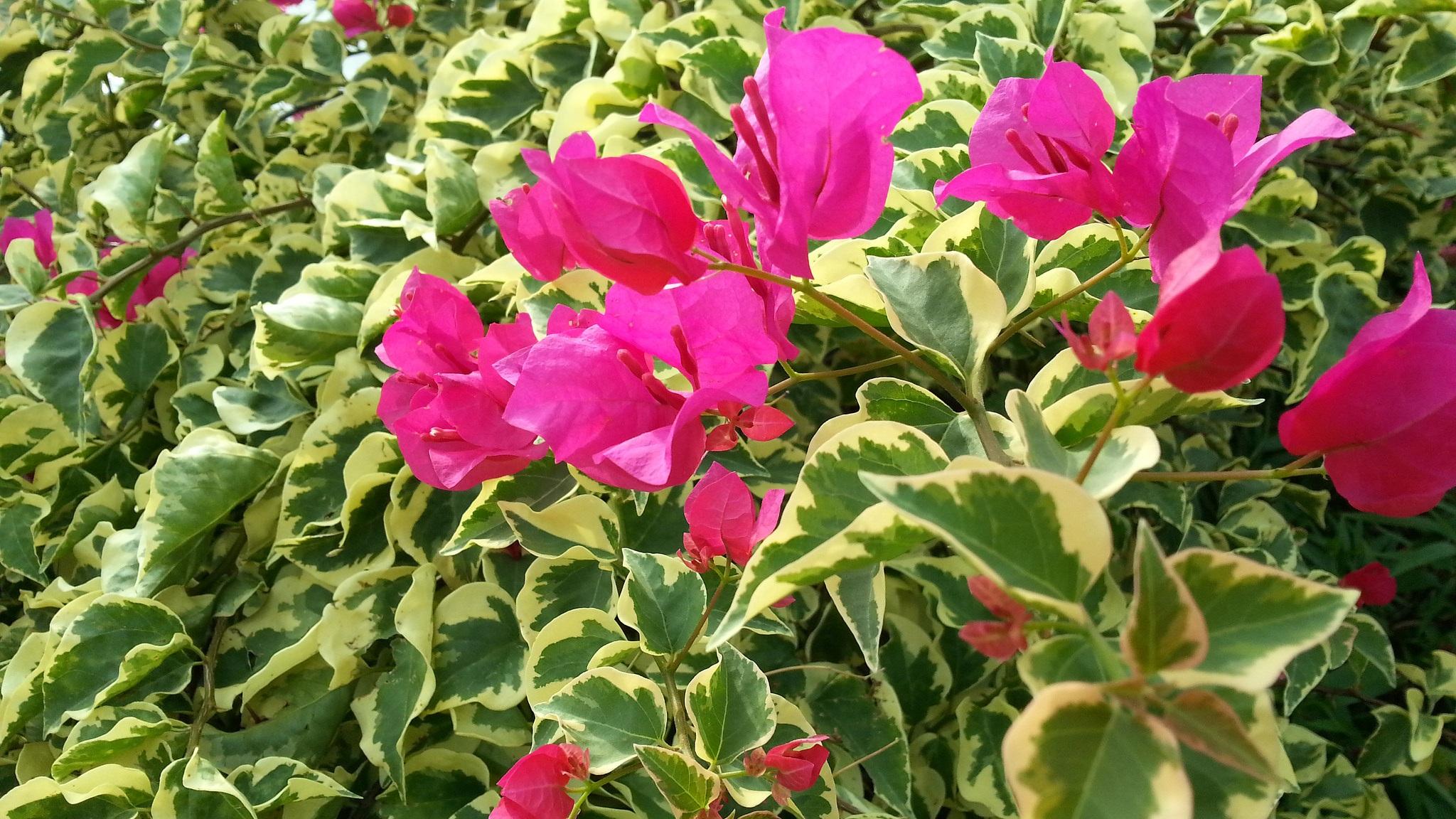 Images gratuites la nature champ fleur floraison t feuillage bouquet vert botanique - Fond d ecran jardin anglais ...