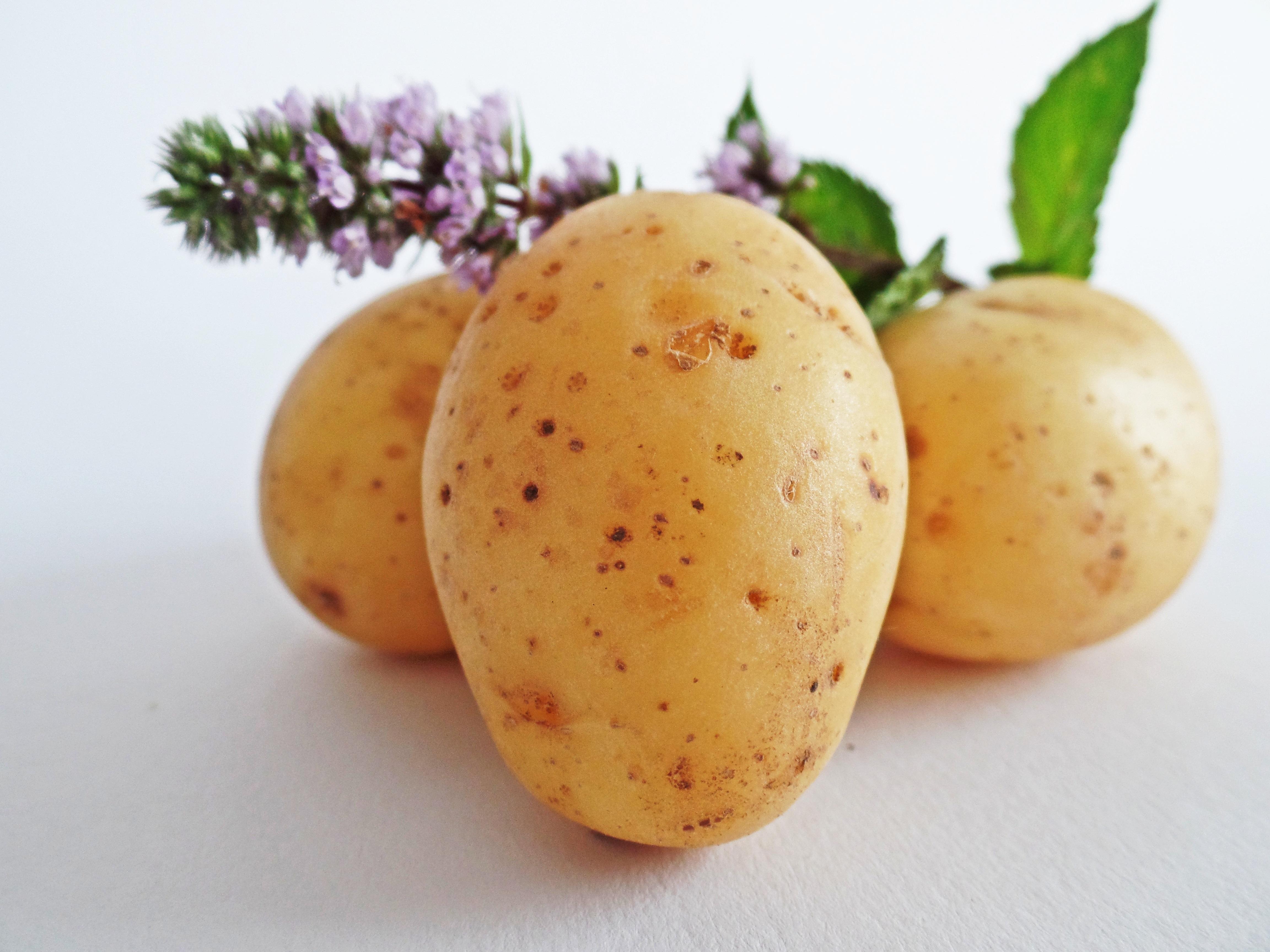 Kartoffel Bilder Kostenlos kostenlose foto natur feld frucht lebensmittel produzieren