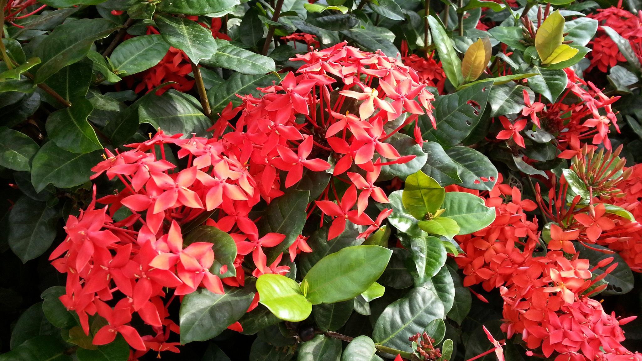 Images gratuites la nature champ feuille fleur floraison t feuillage bouquet vert - Plante a feuilles rouges ...