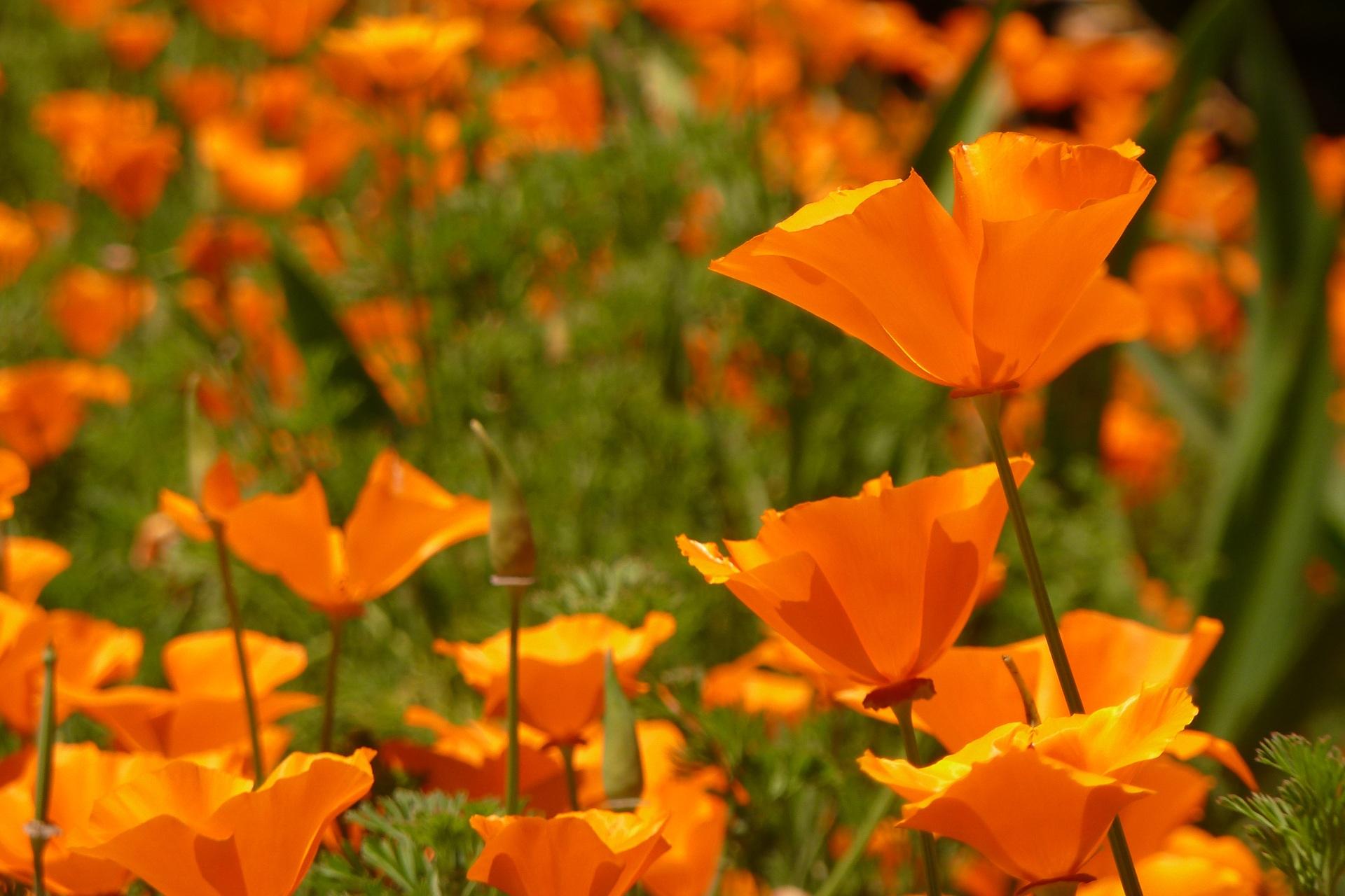 Images Gratuites La Nature Champ Prairie Prairie Fleur Petale