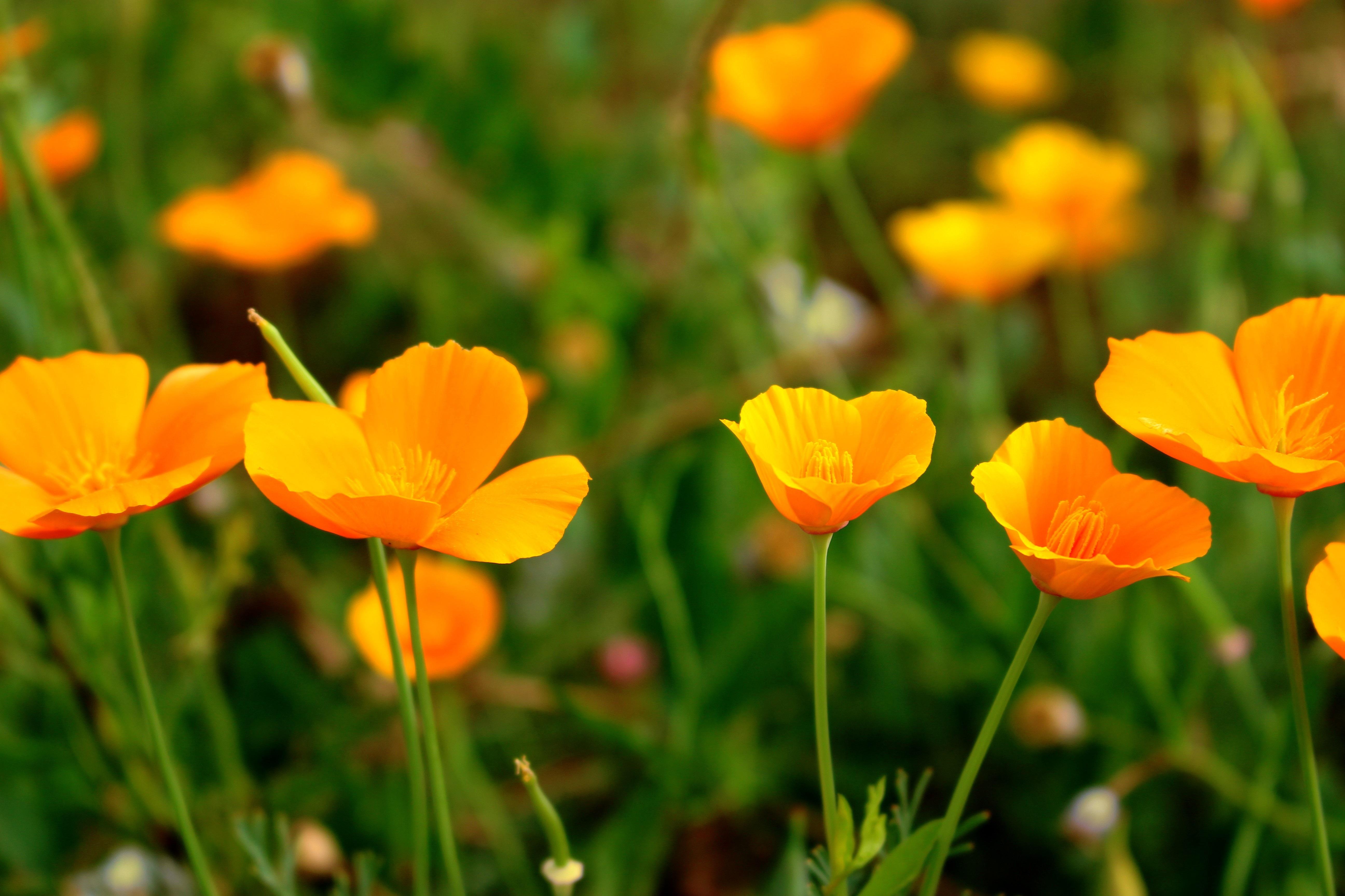 Free Images Nature Field Meadow Prairie Flower Petal Yellow