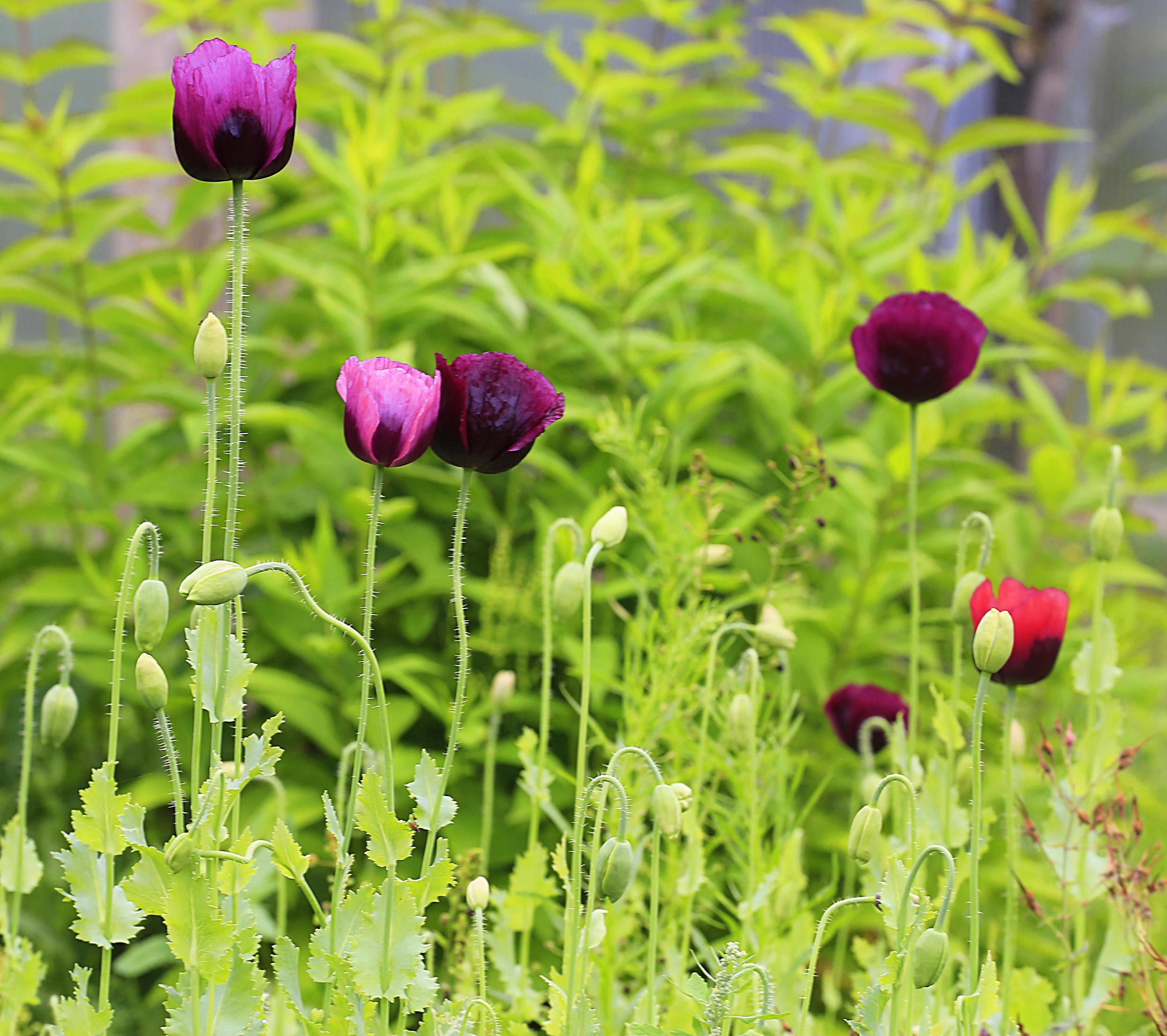 Nature Plant Field Meadow Prairie Flower Purple Bloom Summer Botany Garden Flora Wildflower Flowers Hiness Beauty