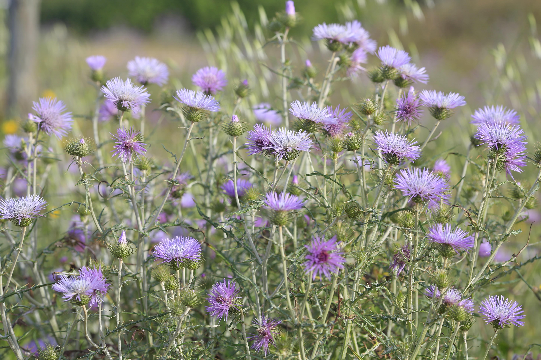 Free Images Nature Field Meadow Prairie Flower Spring Herb